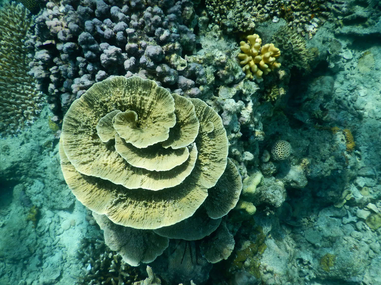 Snorkeling à Karimunjawa, Indonésie