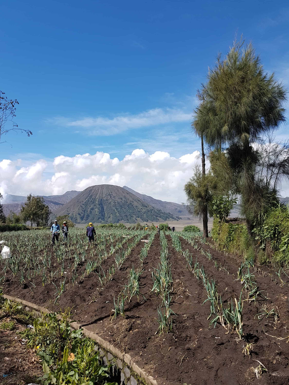 Paysants de Cemoro Lawang avec en arrière plan le Mont Bromo, Indonésie