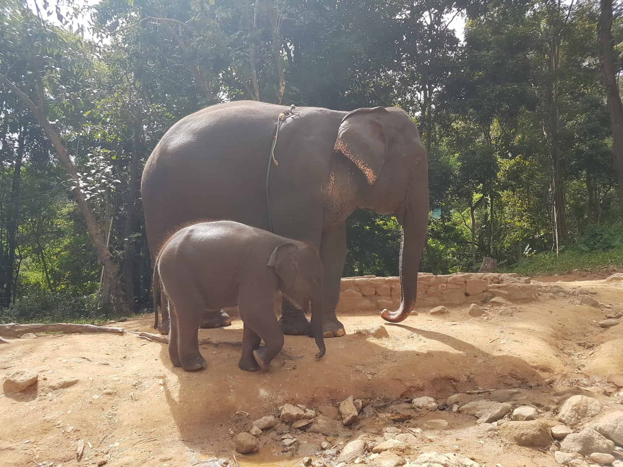 Thaïlande, tour en quad et rencontre imprévue avec les éléphants 🐘 10