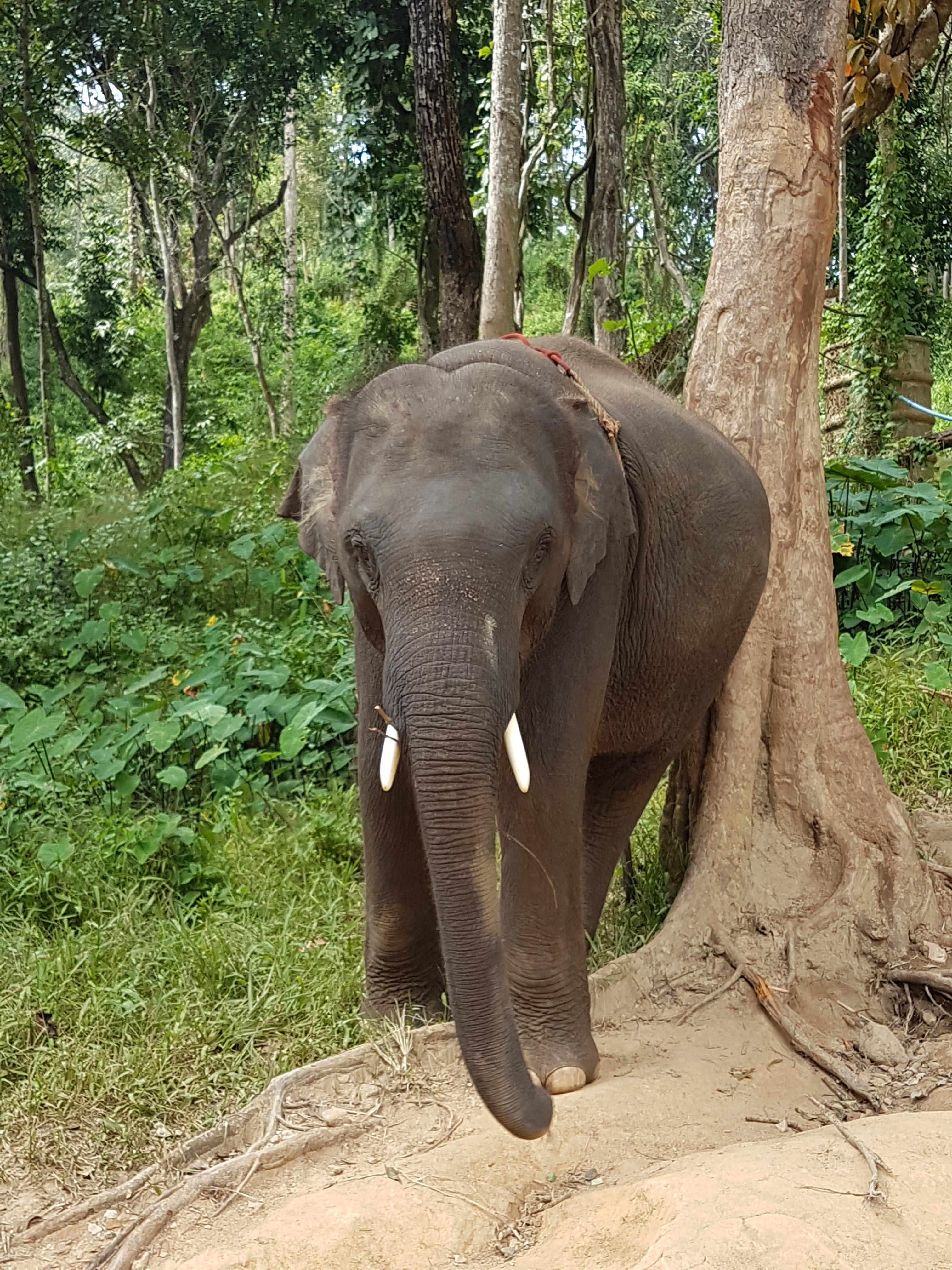 Thaïlande, tour en quad et rencontre imprévue avec les éléphants 🐘 11