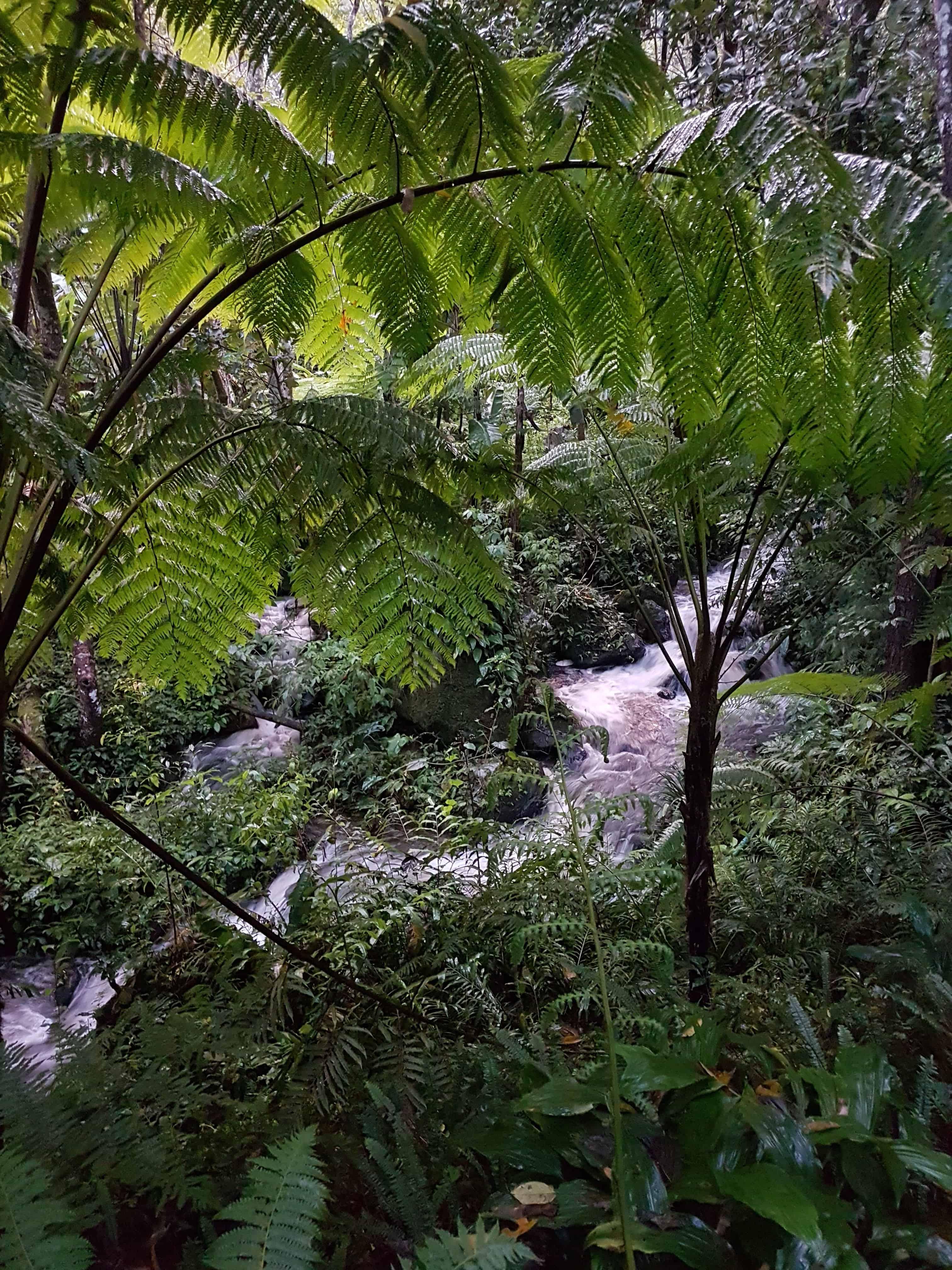 Thaïlande, dormir dans le parc national Doï Inthanon sous une tente 🏕 2