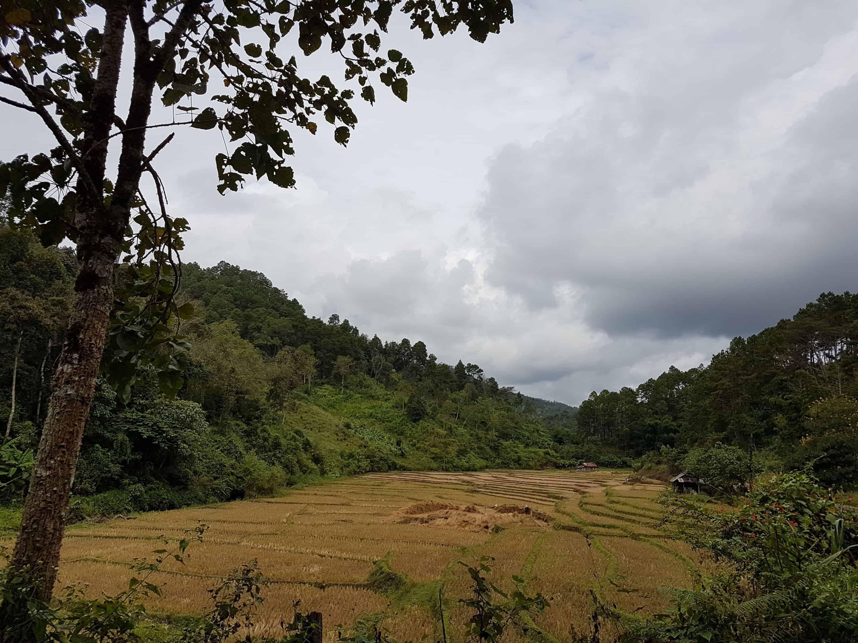 Thaïlande, le Chinese Village et ses cultures de thé 🏯 1