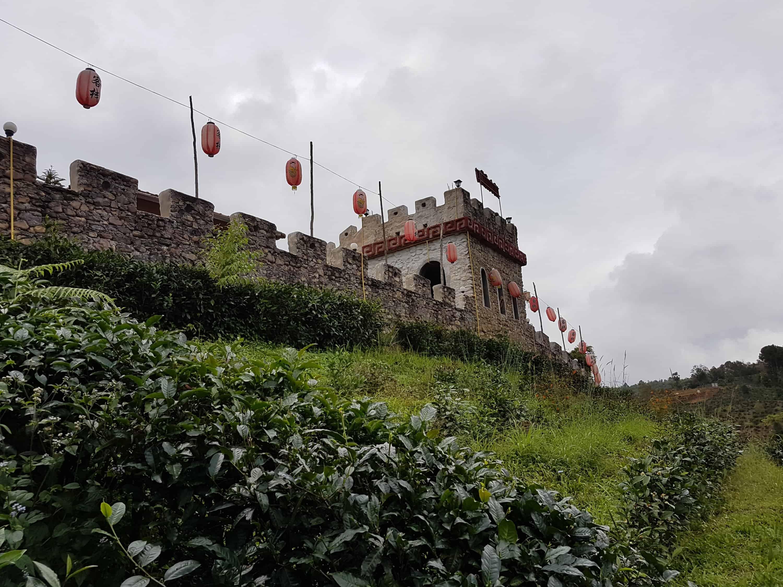 Thaïlande, le Chinese Village et ses cultures de thé 🏯 10