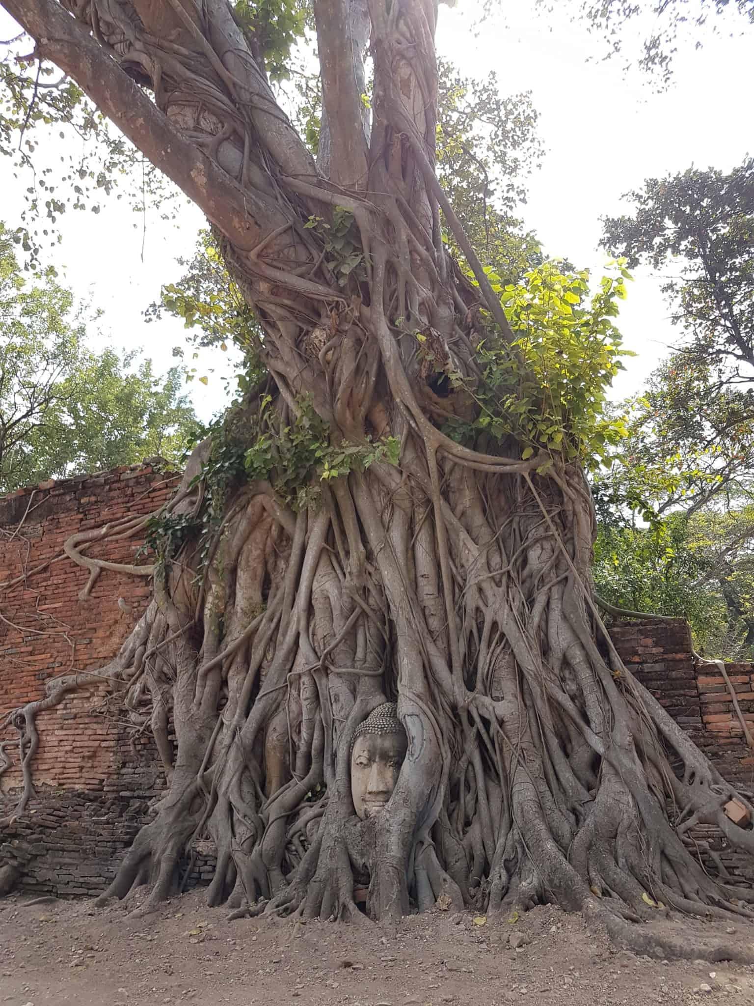 Thaïlande, visite d'Ayutthaya et de ses temples 🌞 9