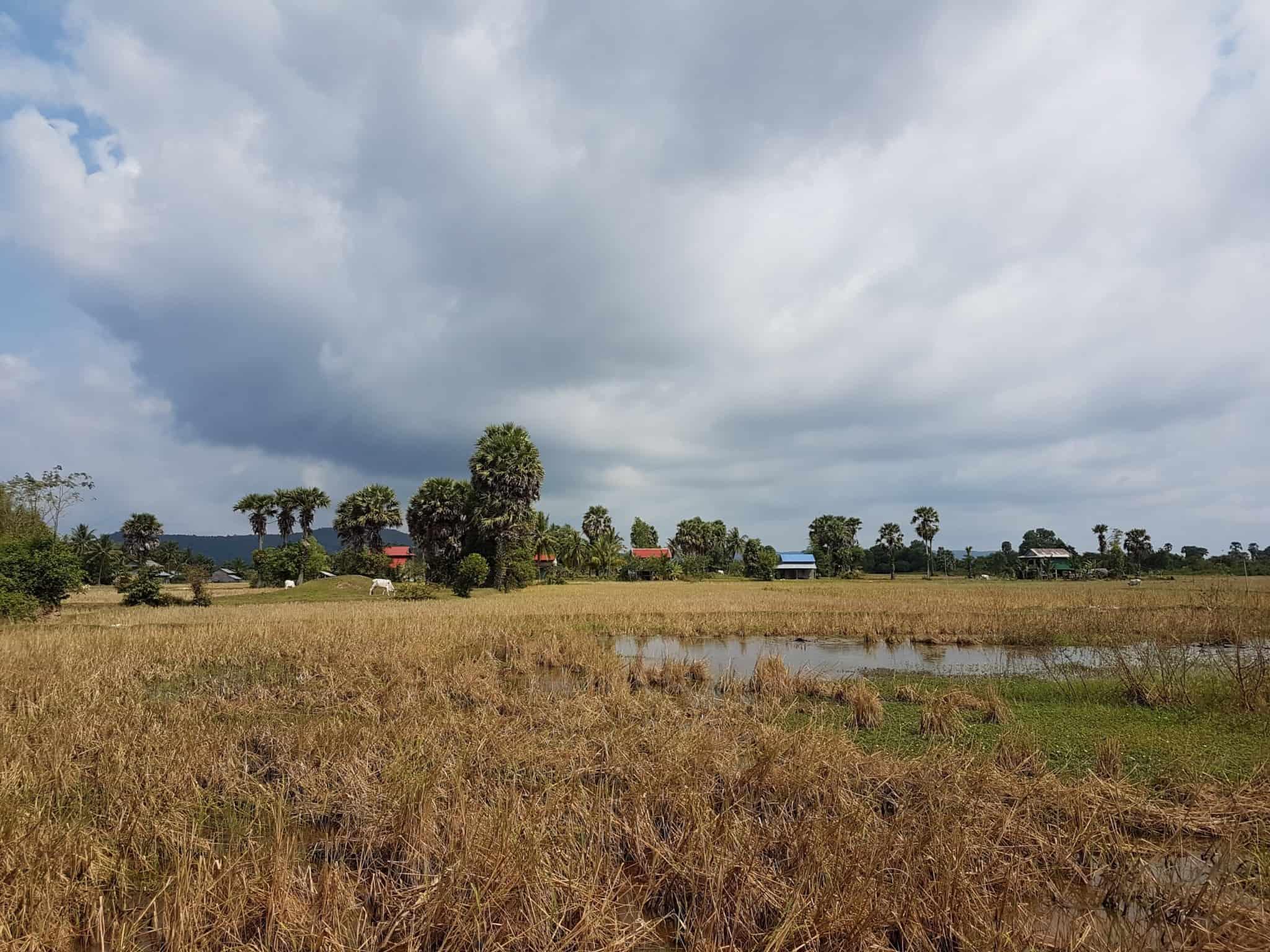 Cambodge, découverte du célèbre poivre de Kampot 🌶 3