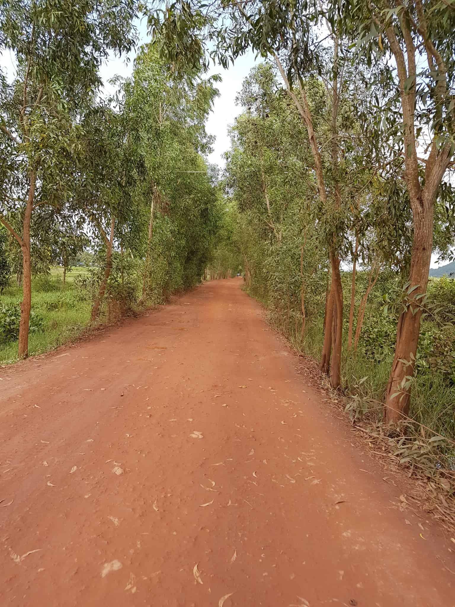 Cambodge, découverte du célèbre poivre de Kampot 🌶 1