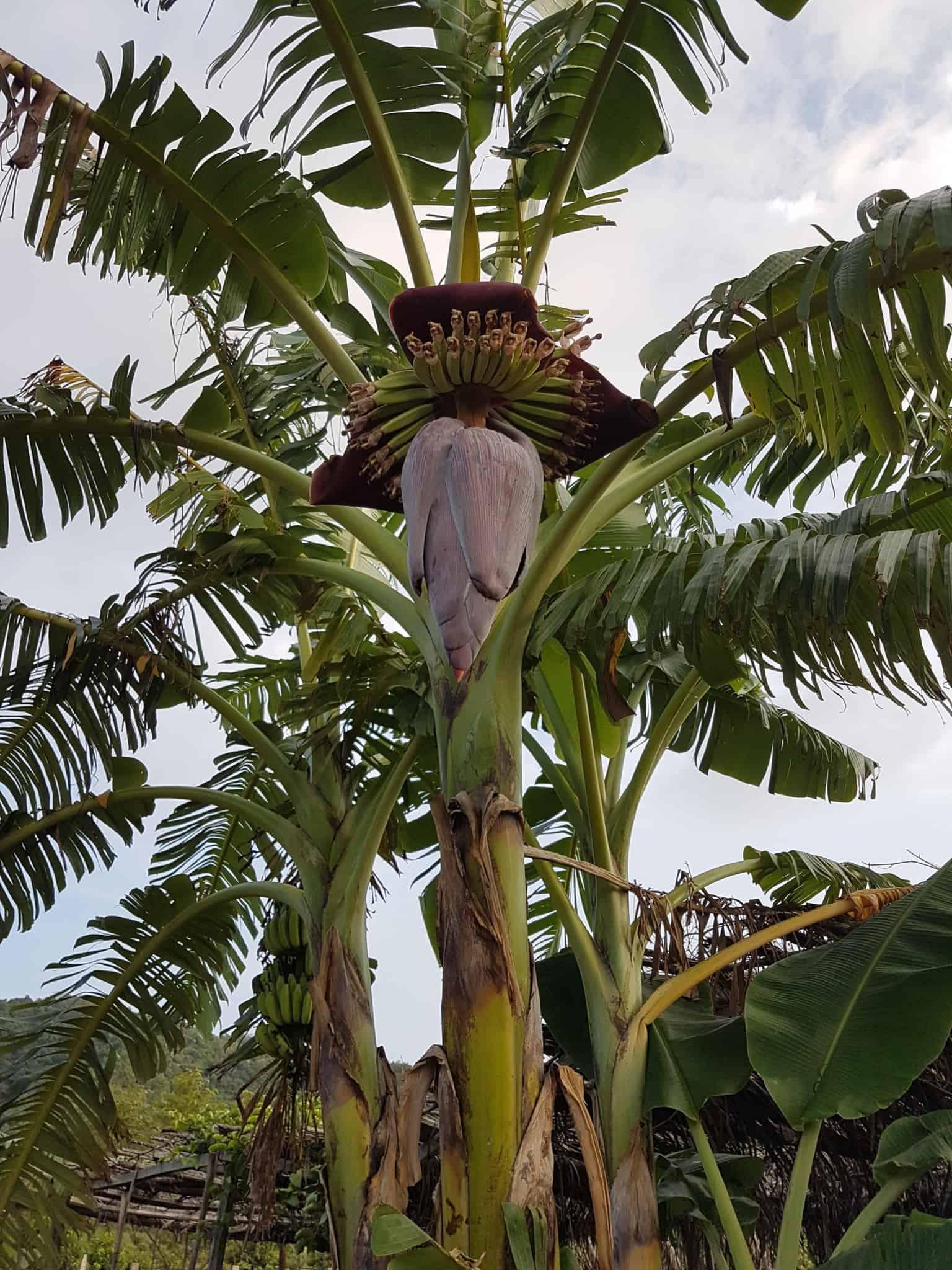 Cambodge, découverte du célèbre poivre de Kampot 🌶 16