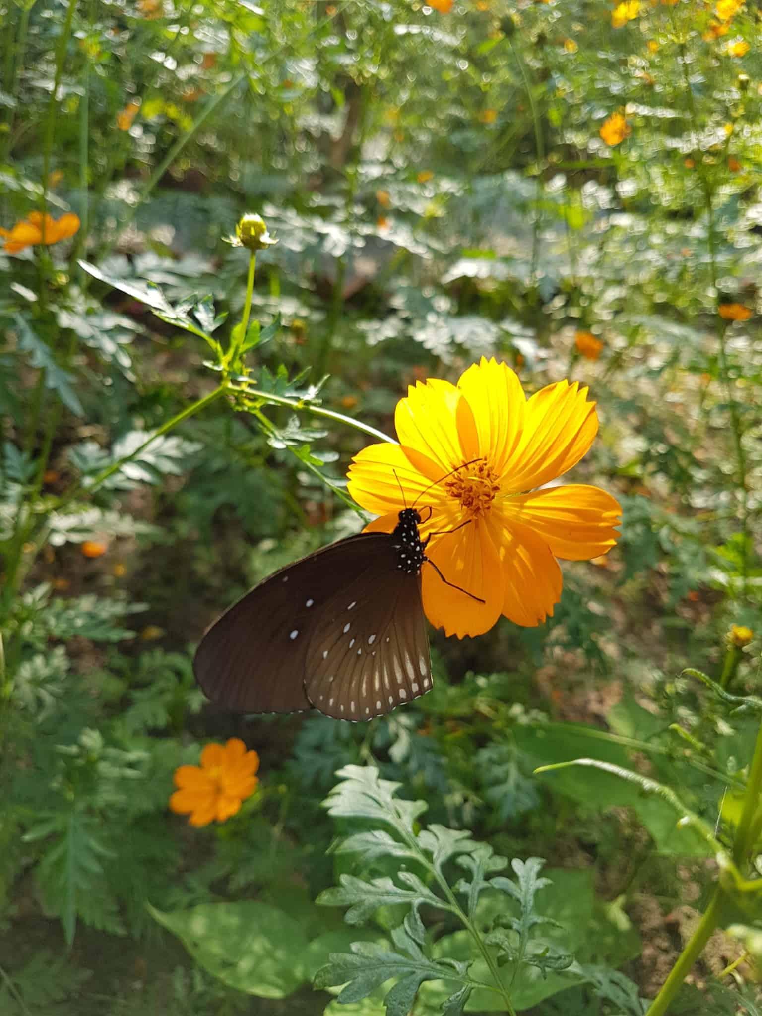 Cambodge, Kep et sa ferme aux papillons 🦋 27
