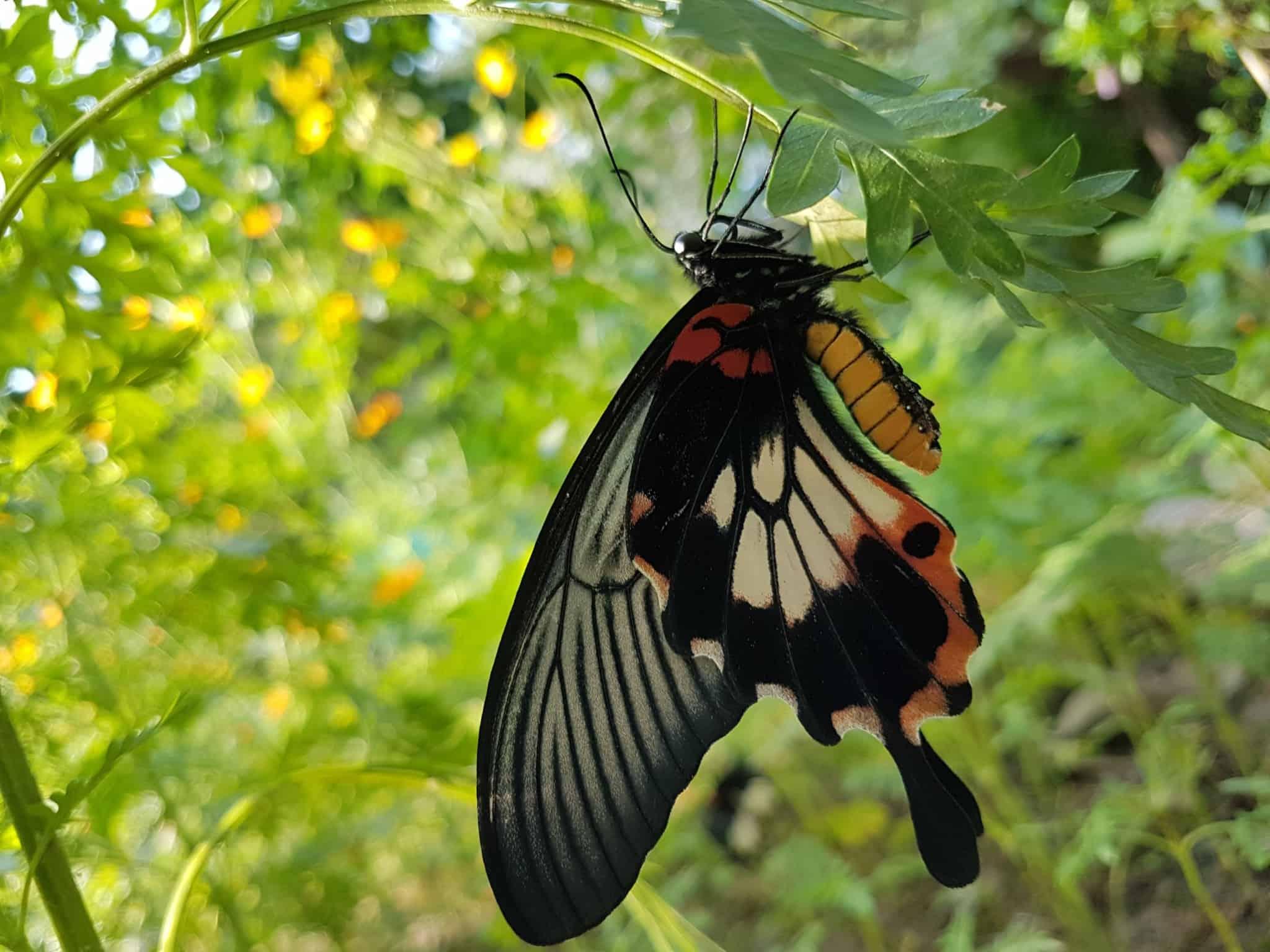 Cambodge, Kep et sa ferme aux papillons 🦋 28