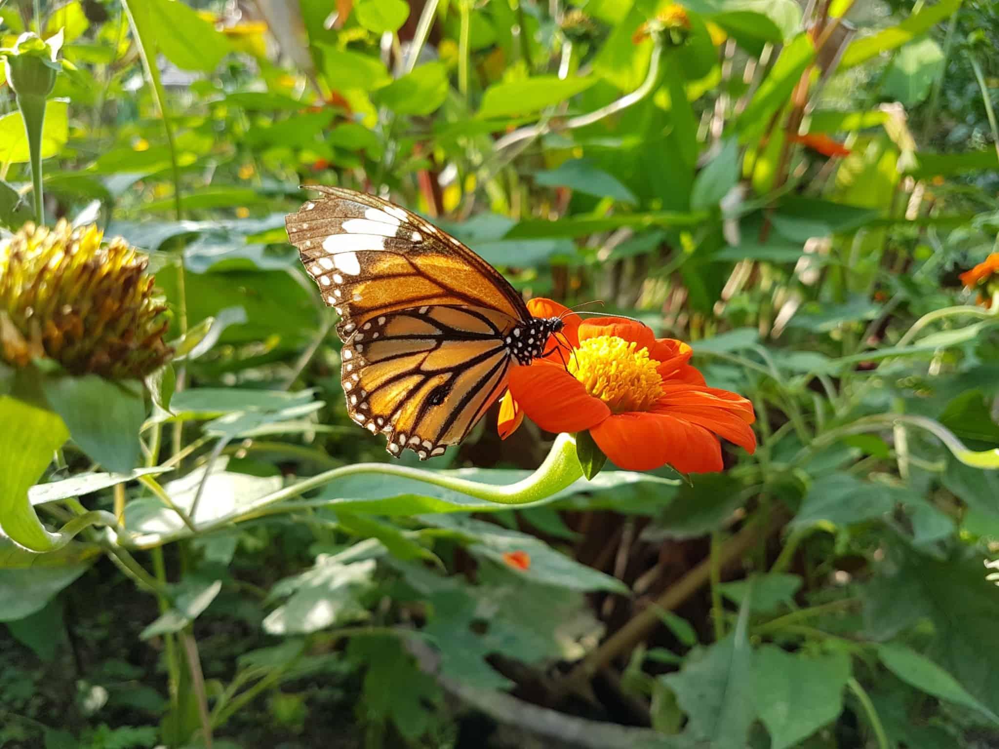 Cambodge, Kep et sa ferme aux papillons 🦋 30
