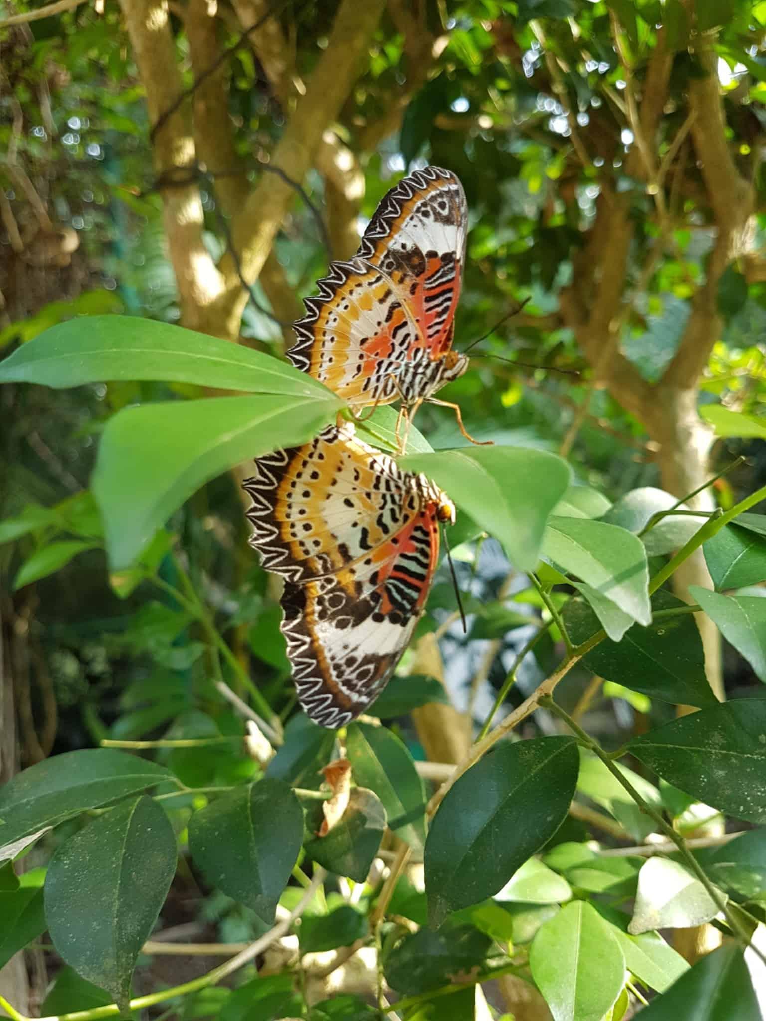 Cambodge, Kep et sa ferme aux papillons 🦋 32