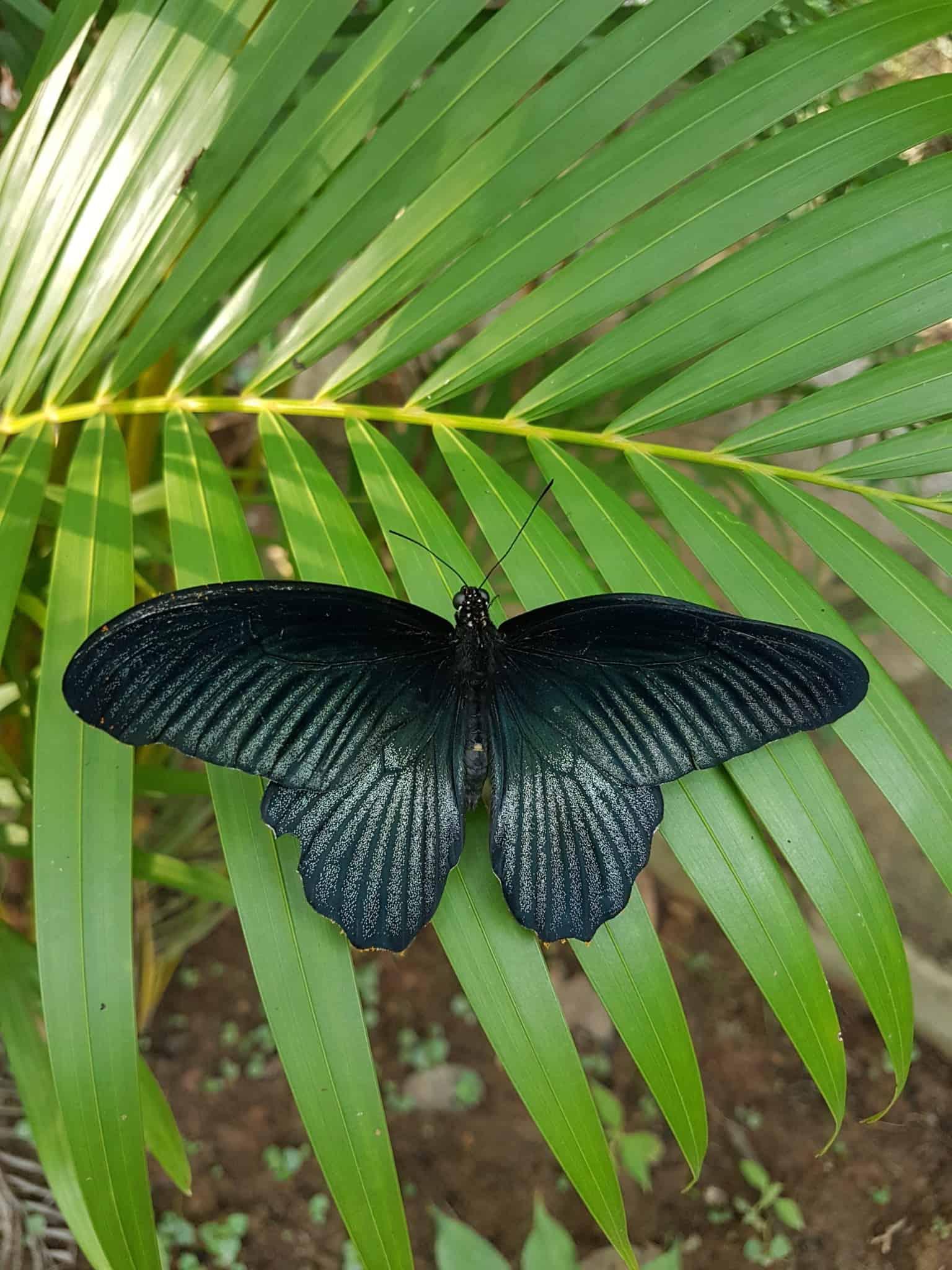 Cambodge, Kep et sa ferme aux papillons 🦋 34
