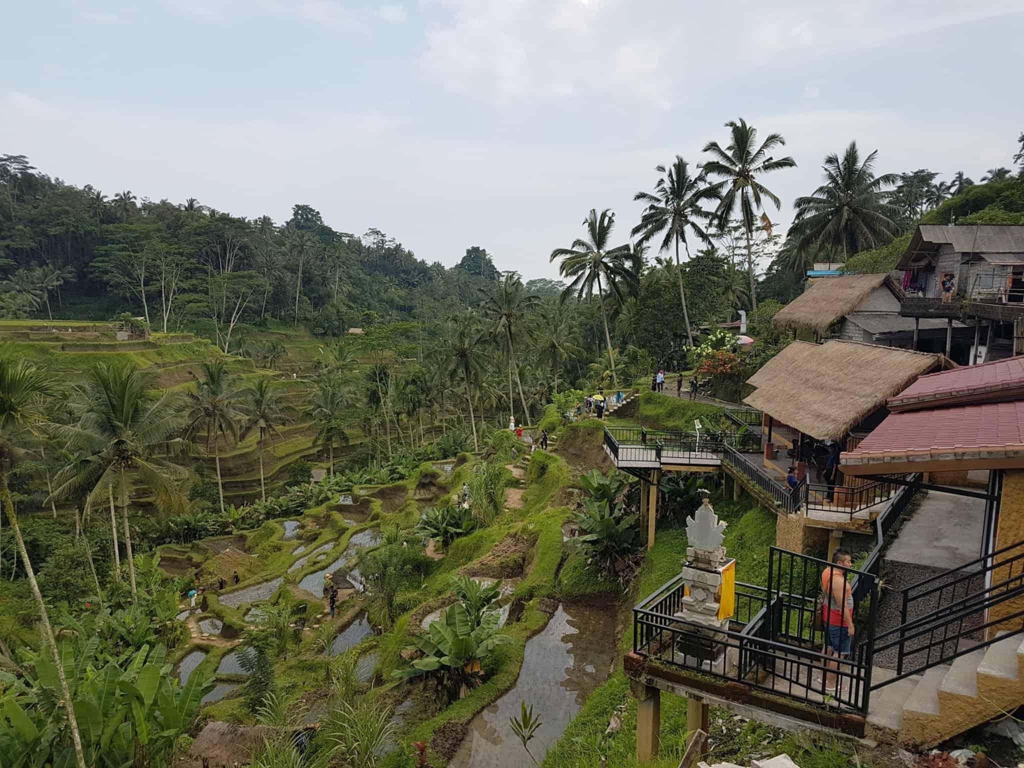 Bali, les rizières de Tegallalang et le temple Pura Tirta Empul🌱 20