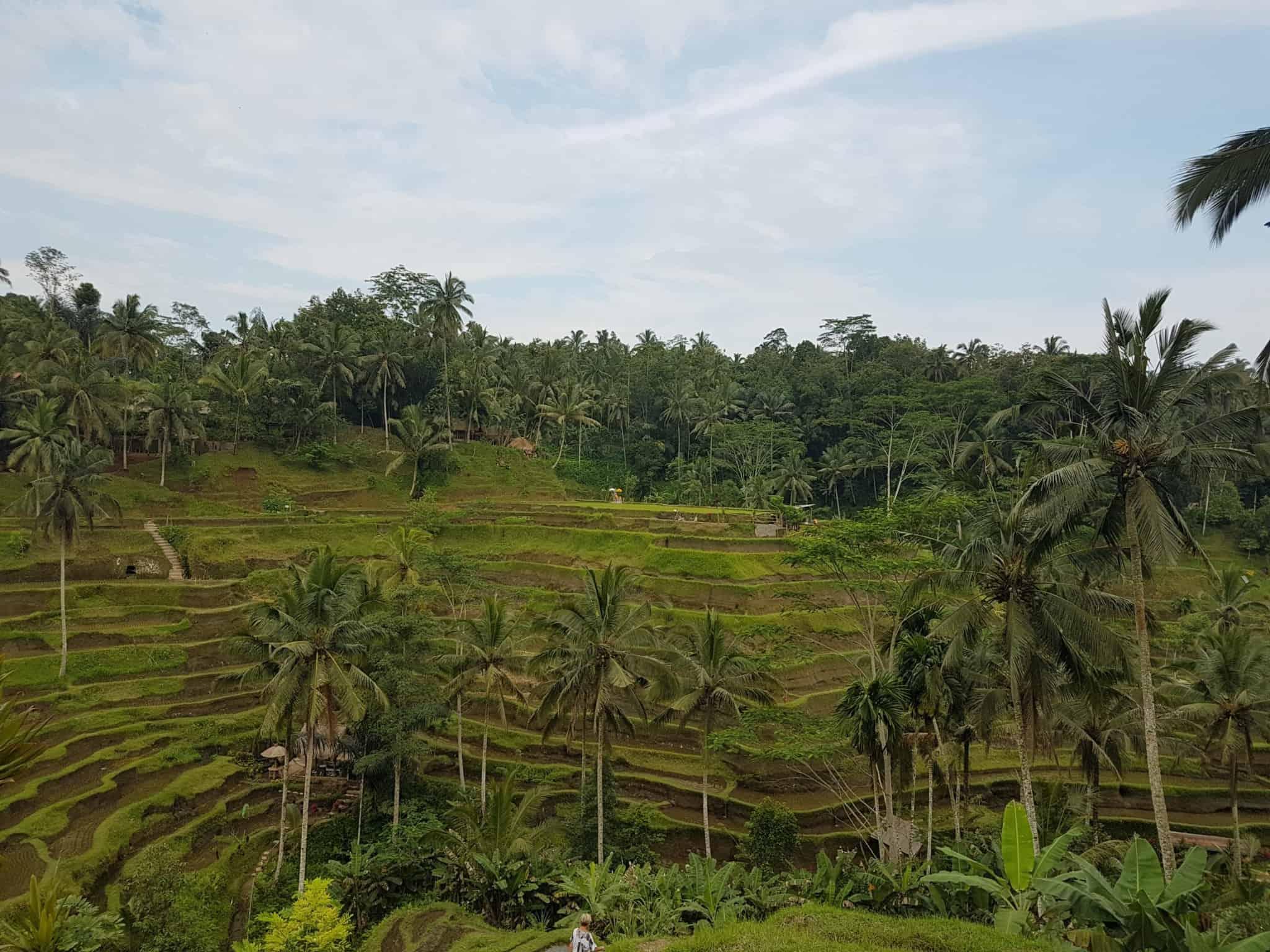 Bali, les rizières de Tegallalang et le temple Pura Tirta Empul🌱 17