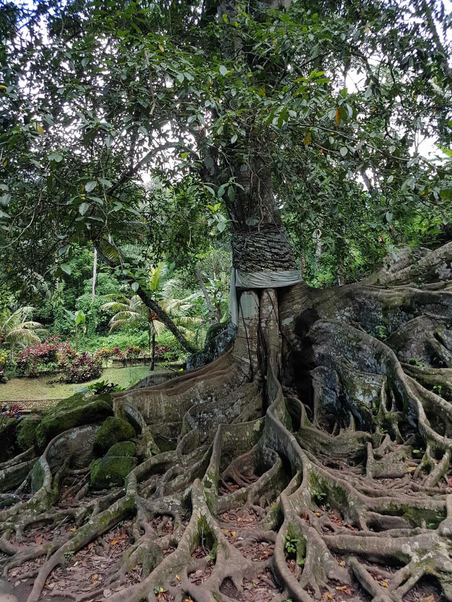 Bali, le joli et atypique temple Goa Gajah 🛕 7