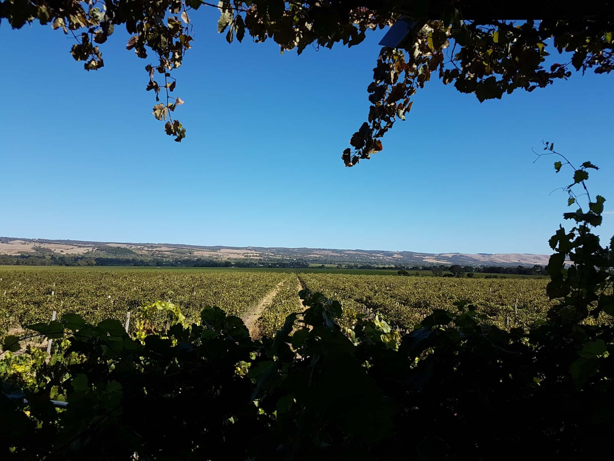 Australie, dégustation de vin et découverte de la réserve Towilla Yerta 🌅 6