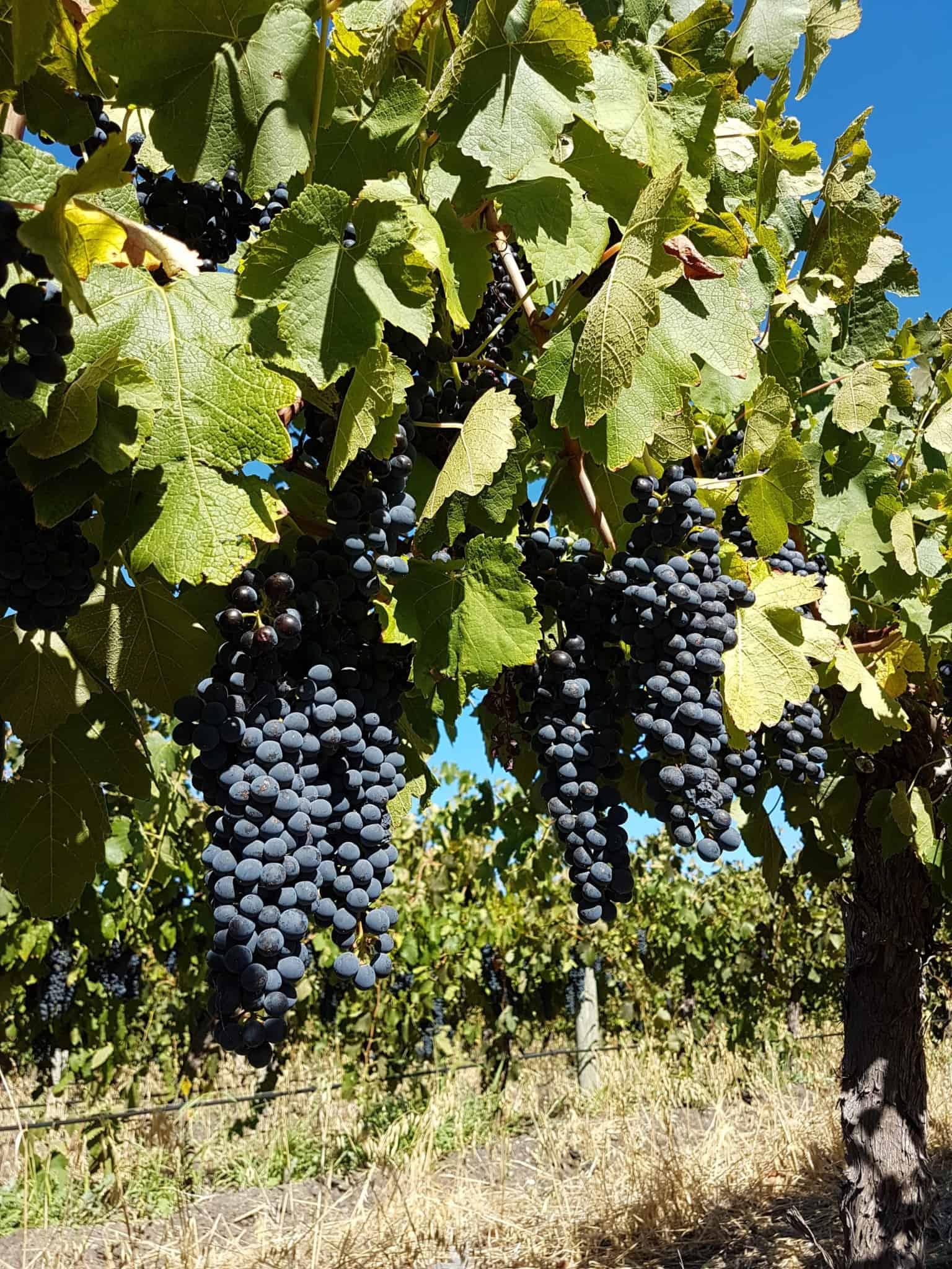 Australie, dégustation de vin et découverte de la réserve Towilla Yerta 🌅 7