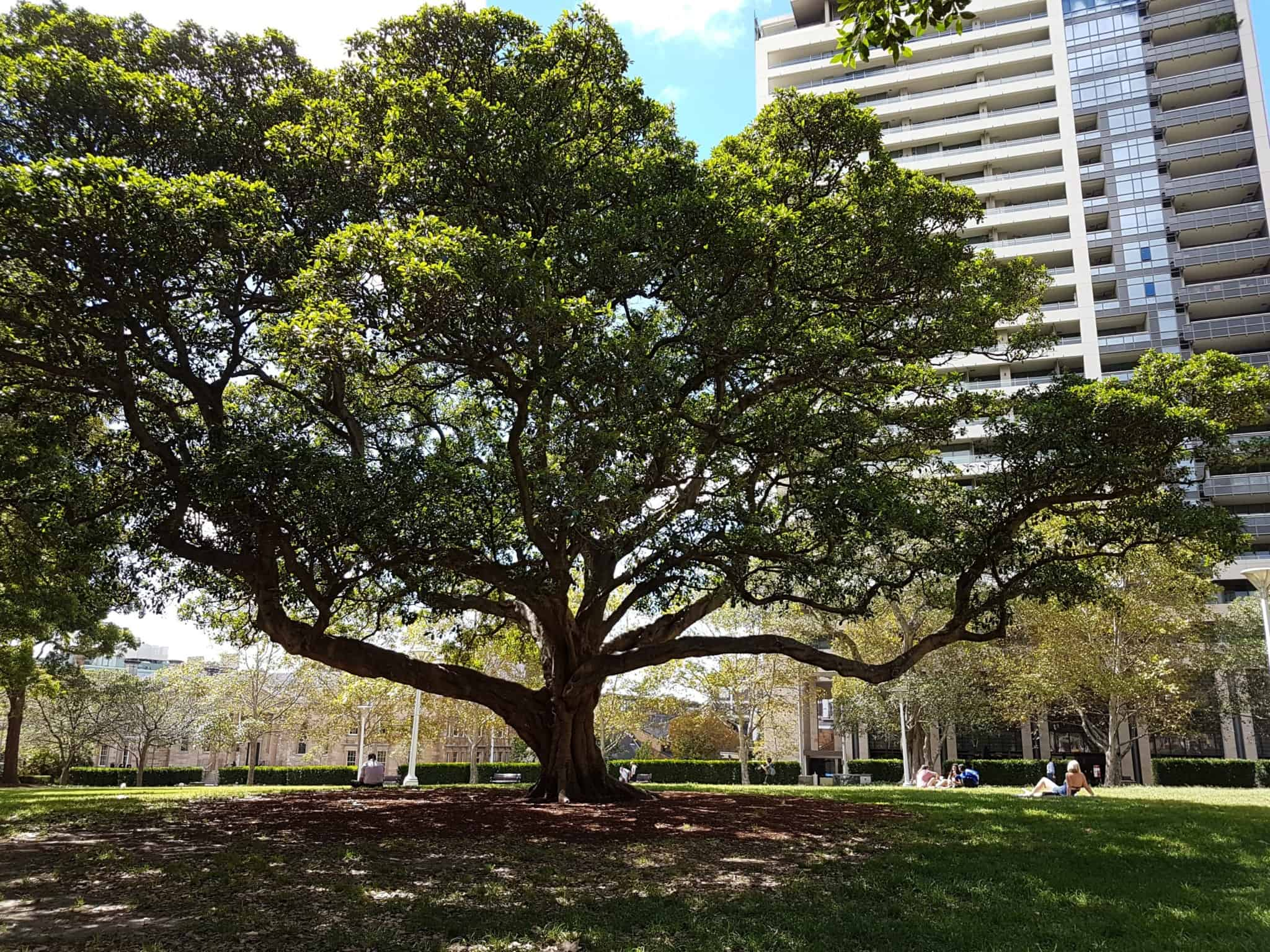 Australie, le jardin botanique de Sydney 🌺 6