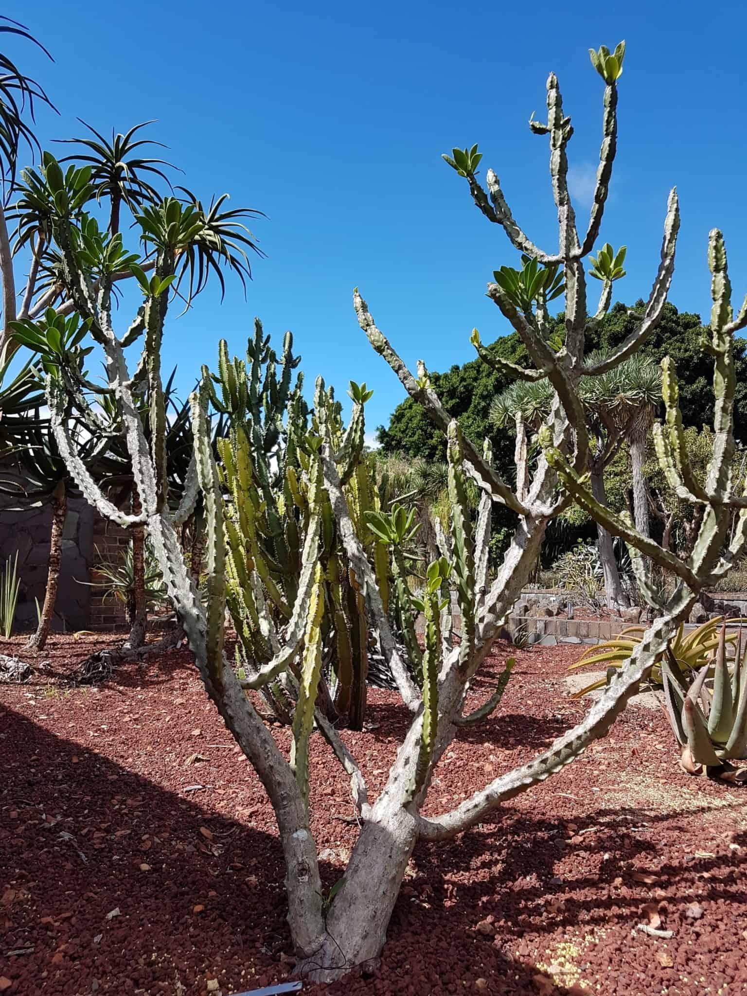 Australie, le jardin botanique de Sydney 🌺 17