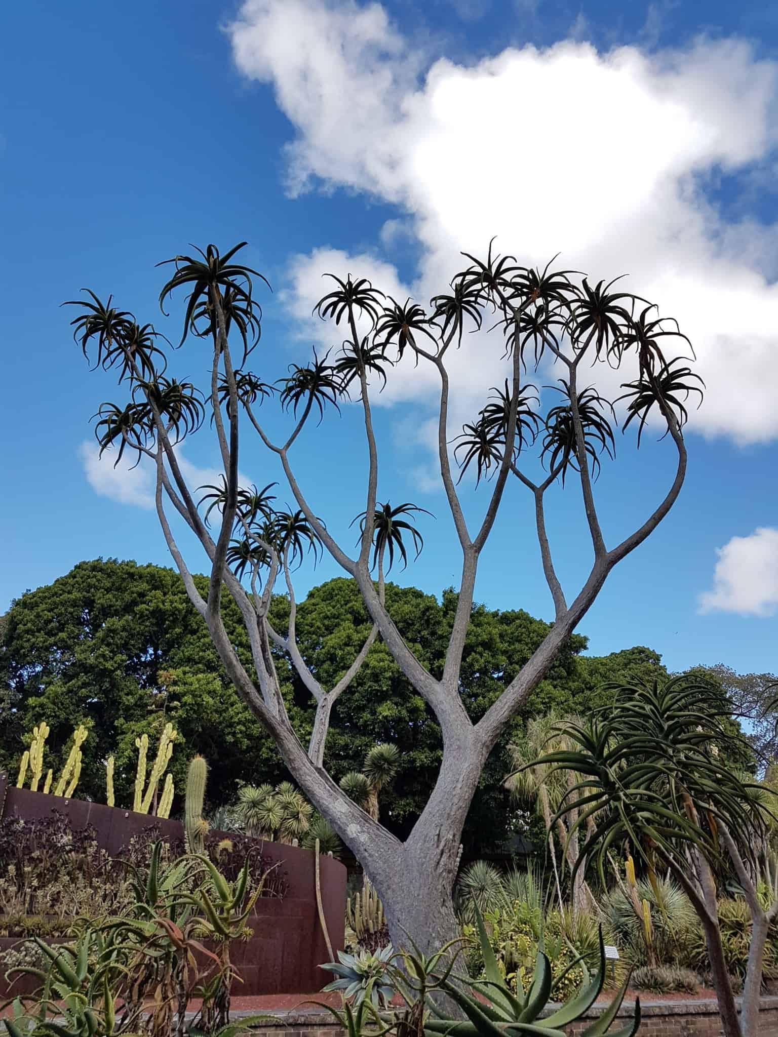 Australie, le jardin botanique de Sydney 🌺 18