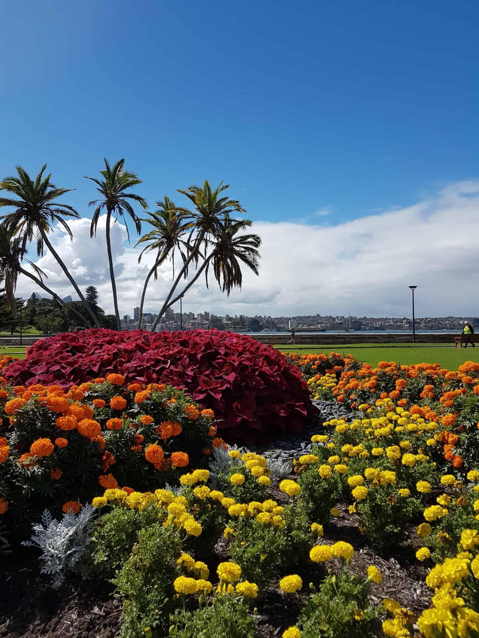 Australie, le jardin botanique de Sydney 🌺 20