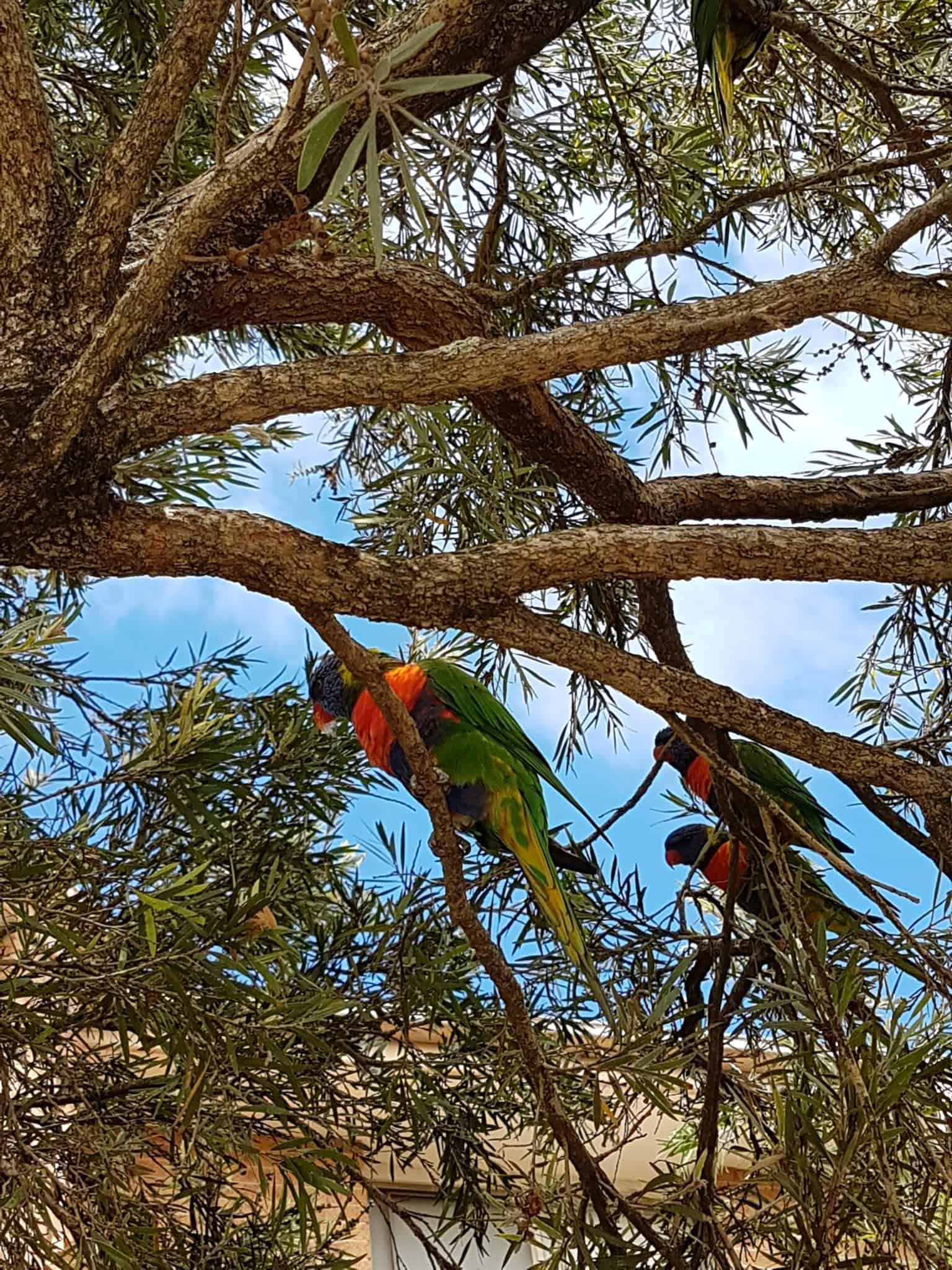 Australie, trois jours dans le quartier de Bondi Beach ⛱ 1