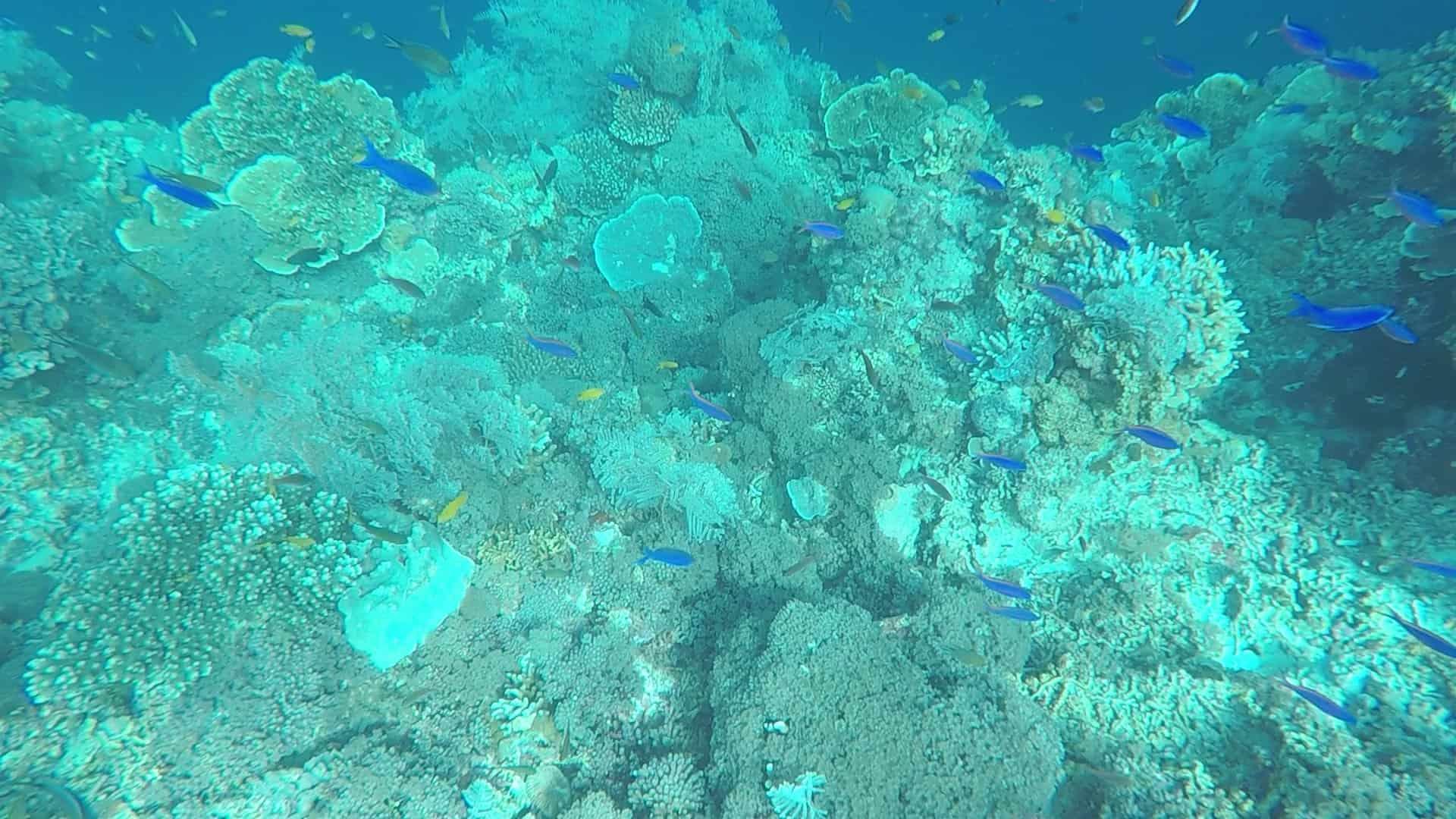 Philippines, un super spot de plongée à Planglao 🤿 20