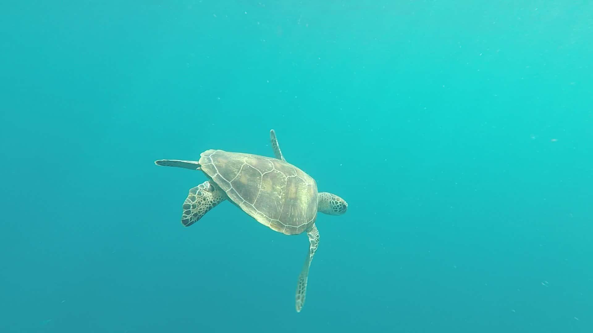 Philippines, un super spot de plongée à Planglao 🤿 26