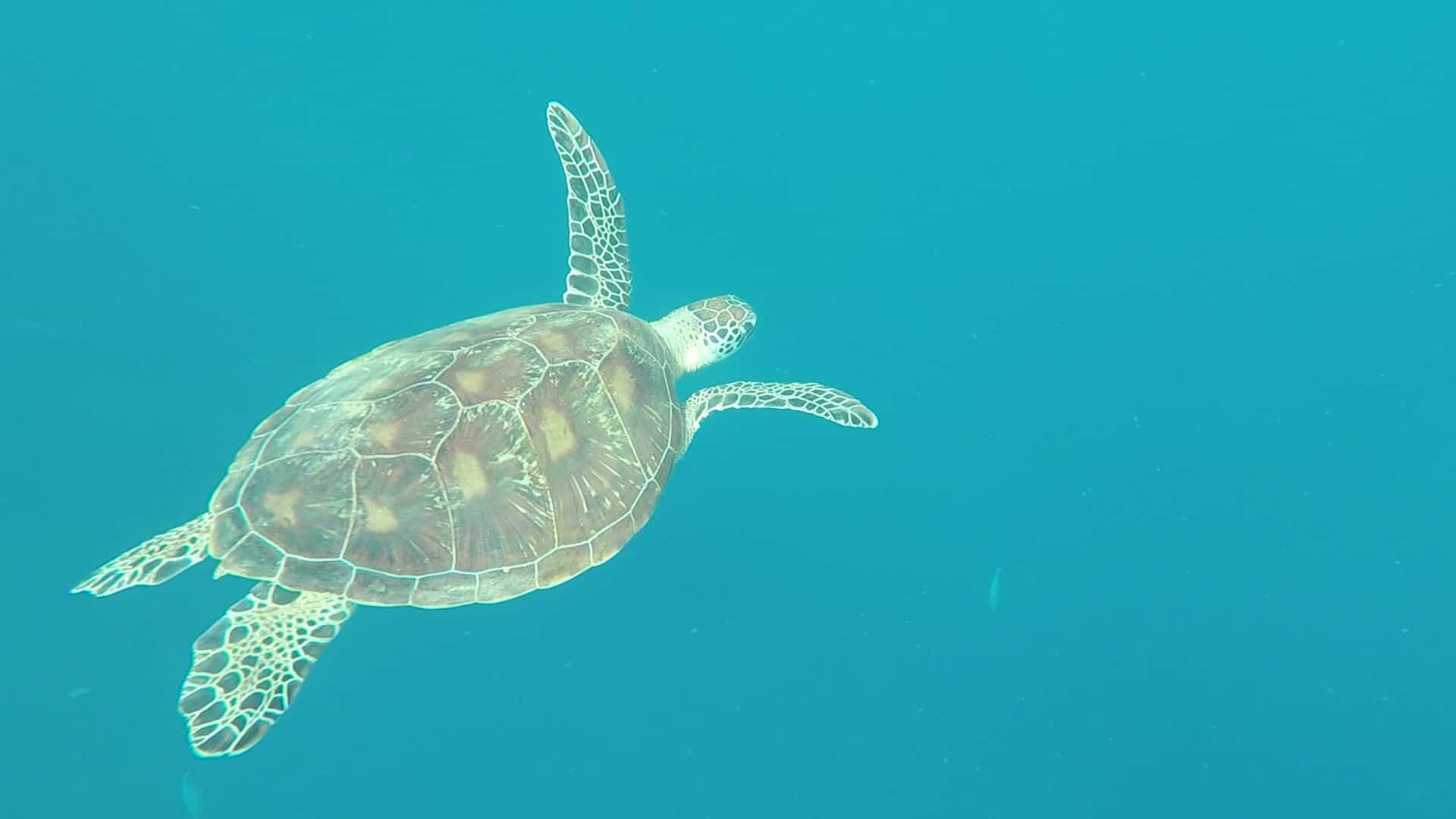 Philippines, un super spot de plongée à Planglao 🤿 25