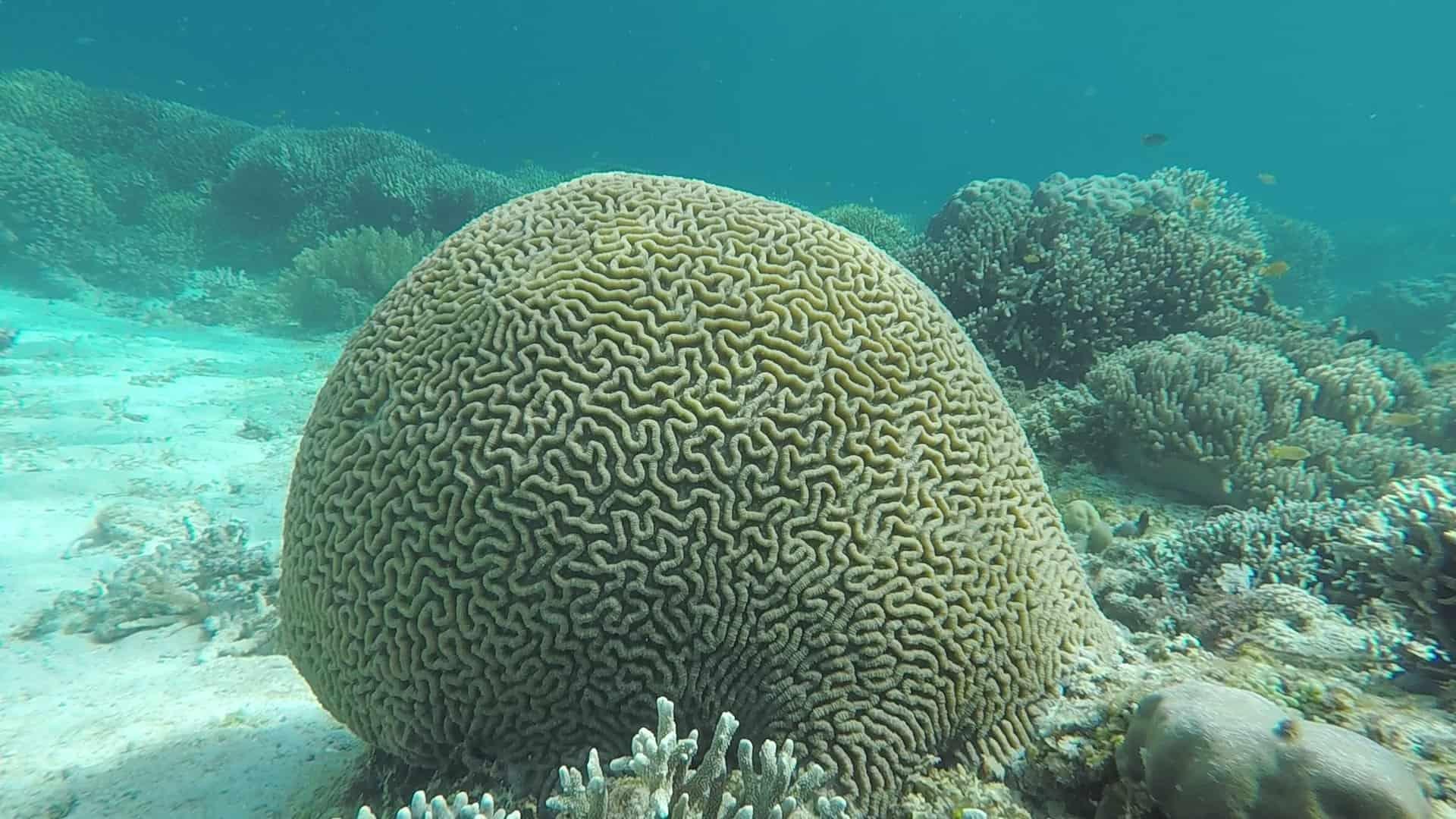 Philippines, un super spot de plongée à Planglao 🤿 22