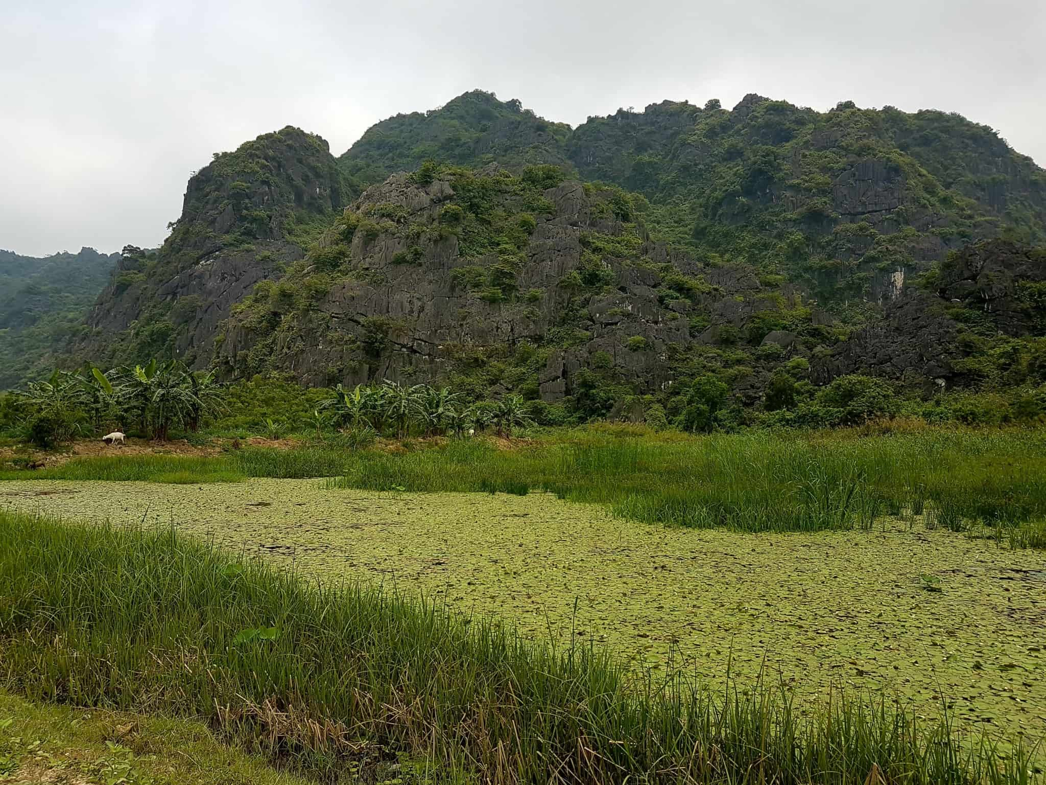 Vietnam, la magnifique réserve naturelle de Vân Long 🌾 3