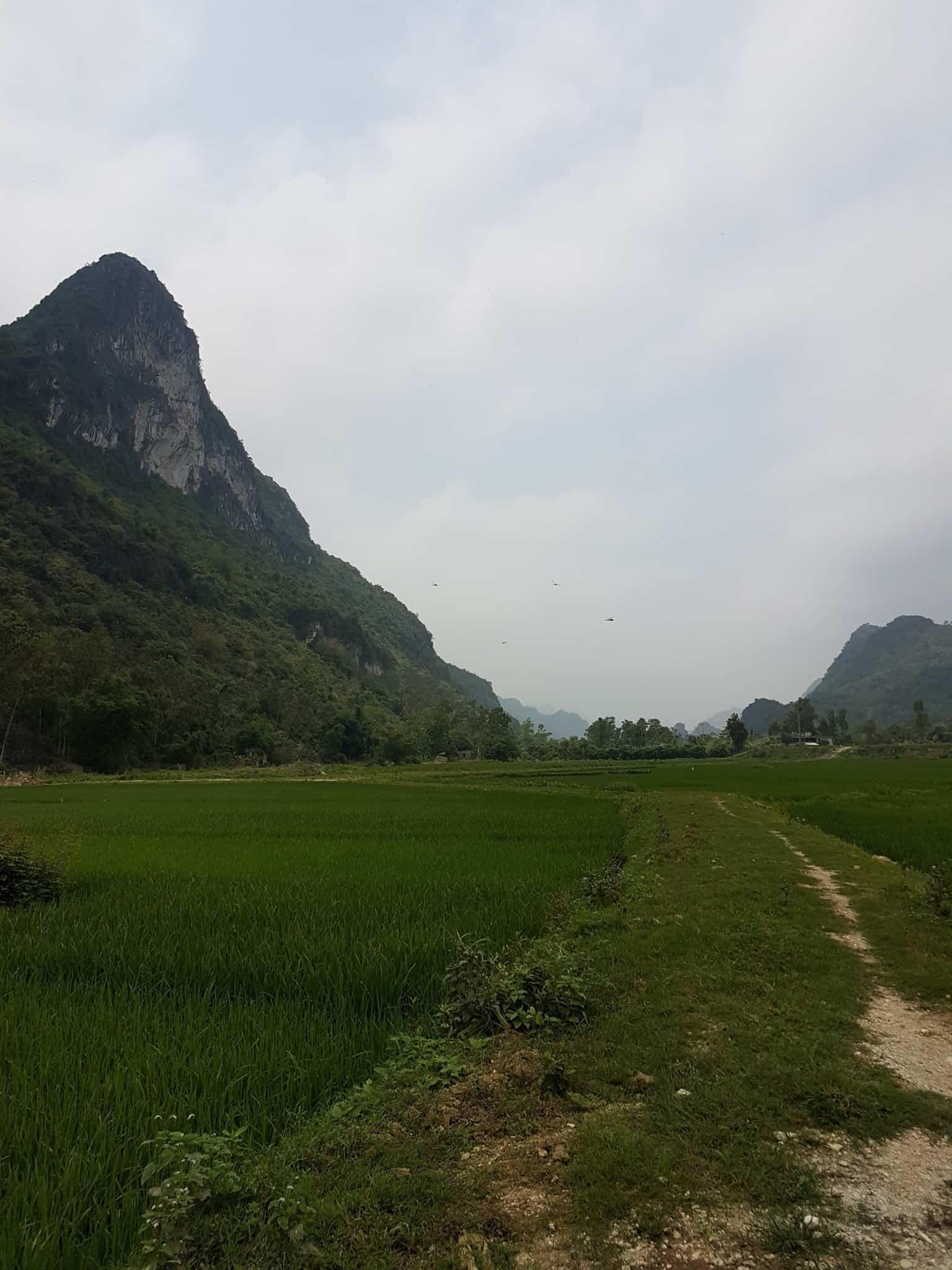 Vietnam, la magnifique réserve naturelle de Vân Long 🌾 13