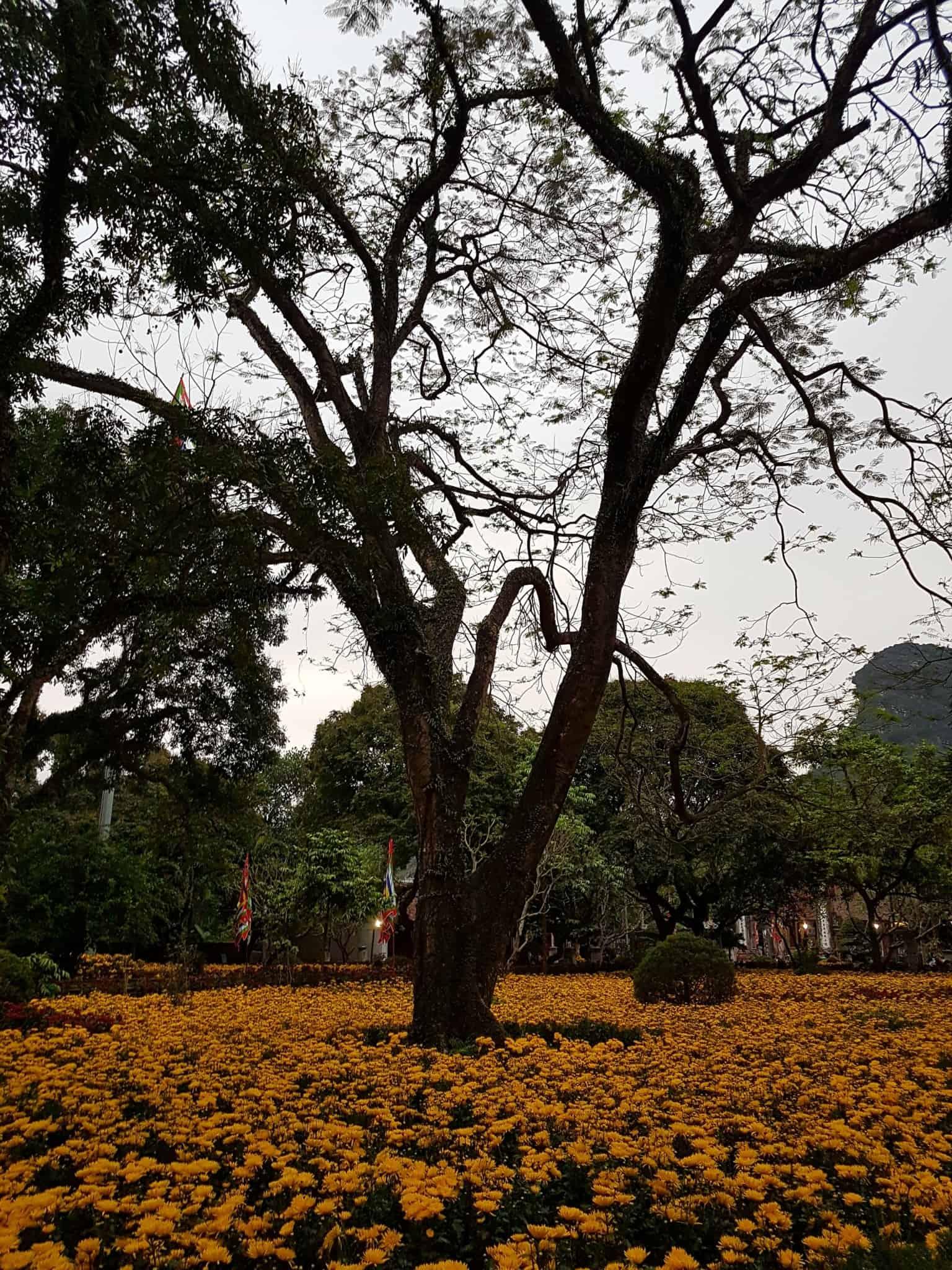 Vietnam, la magnifique réserve naturelle de Vân Long 🌾 39