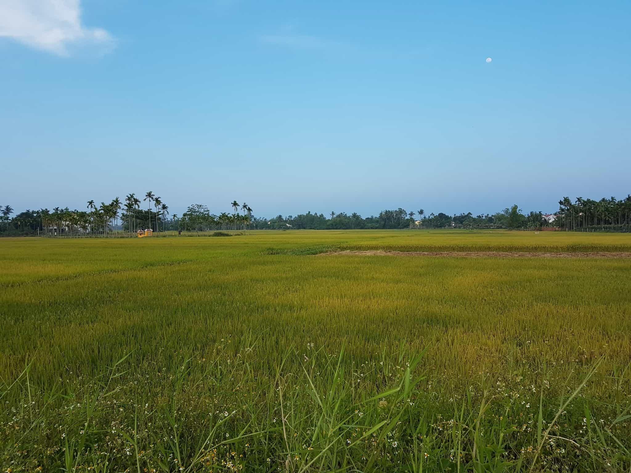 Vietnam, Hoi An la ville des mille lanternes 🏮 35
