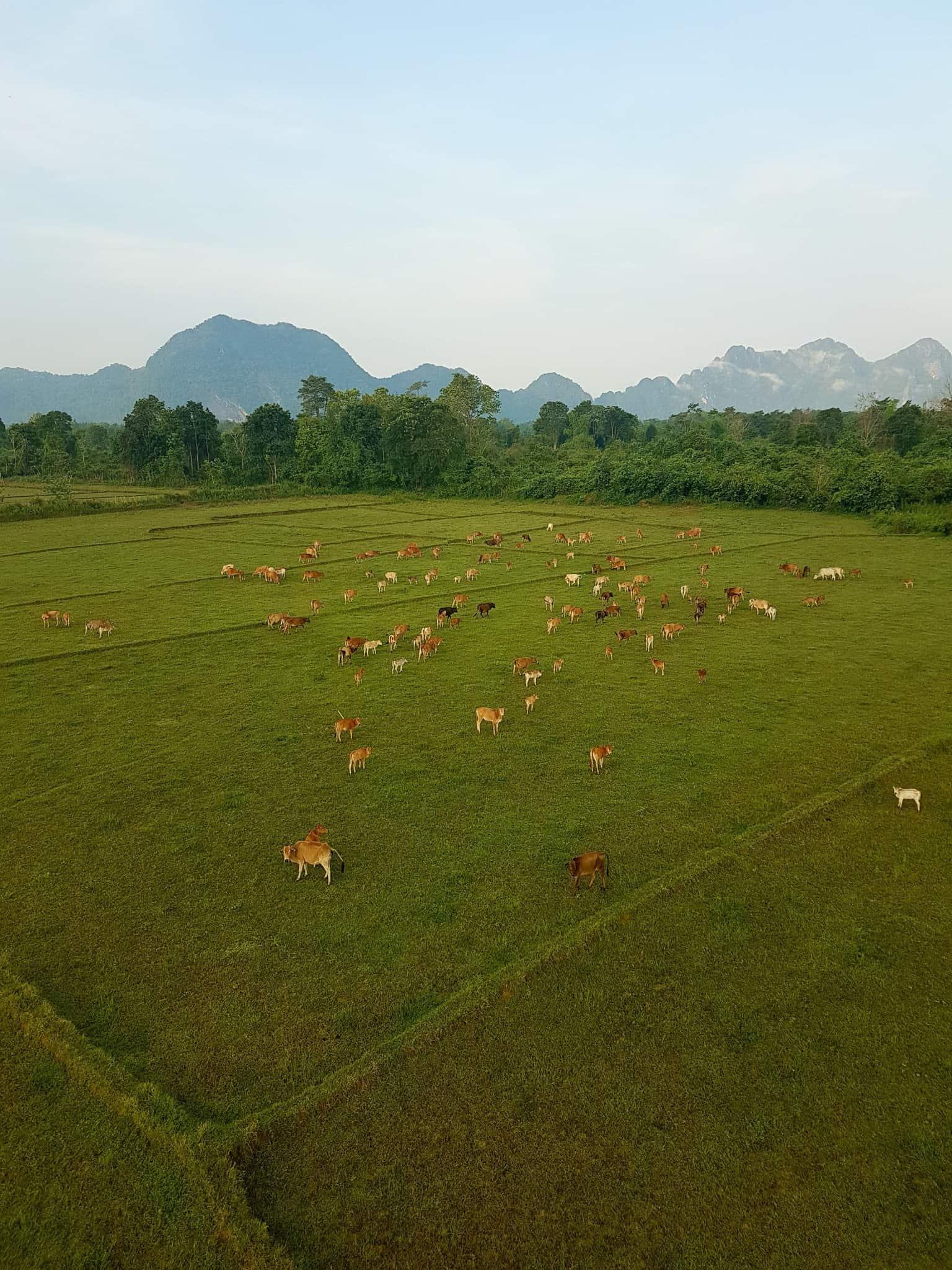 Laos, un vol en montgolfière au dessus de Vang Vieng riche en émotions 🎈 17