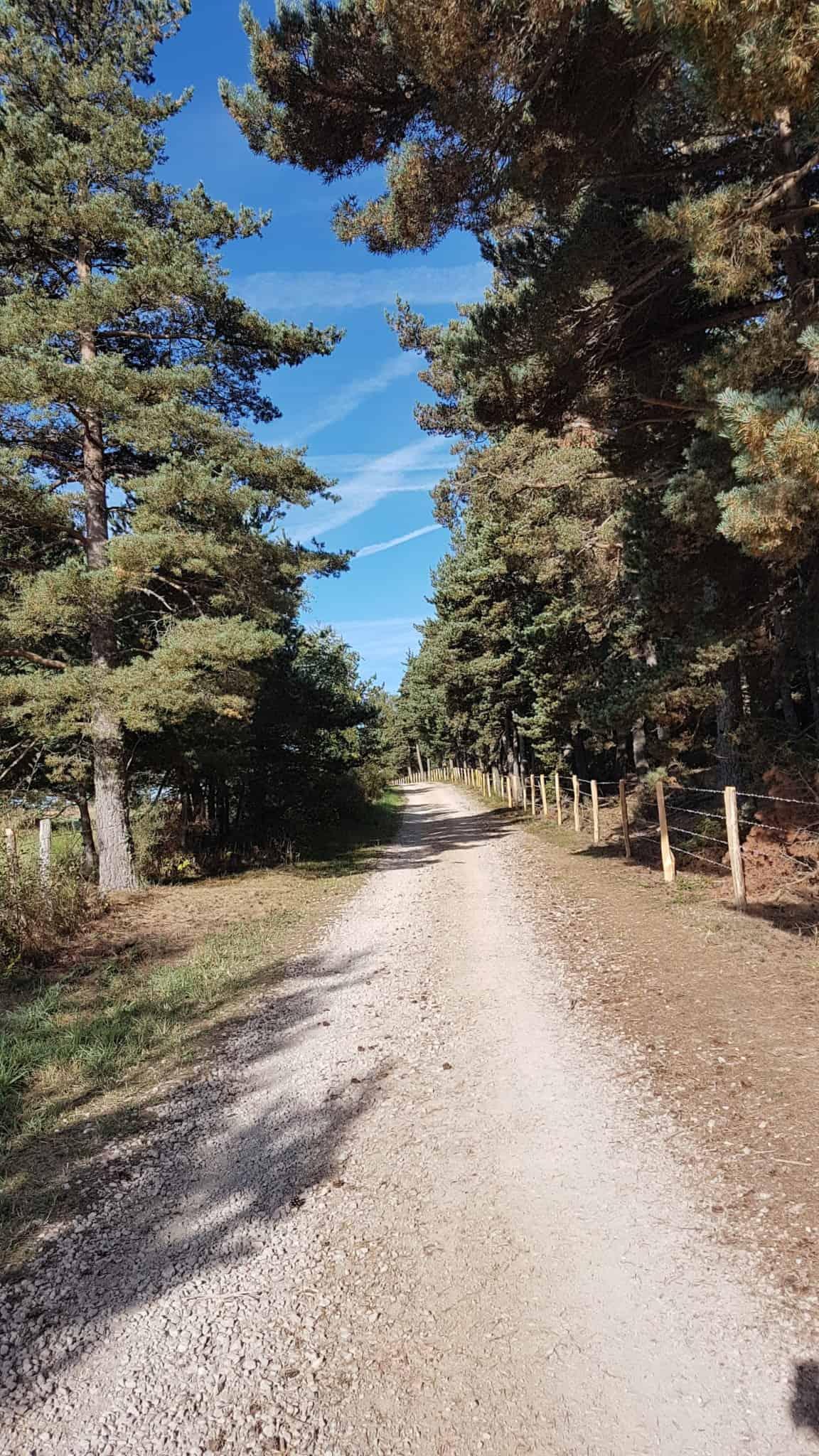 Chemin de Compostelle, une reprise tout en douceur vers les Gentianes 🤗 6
