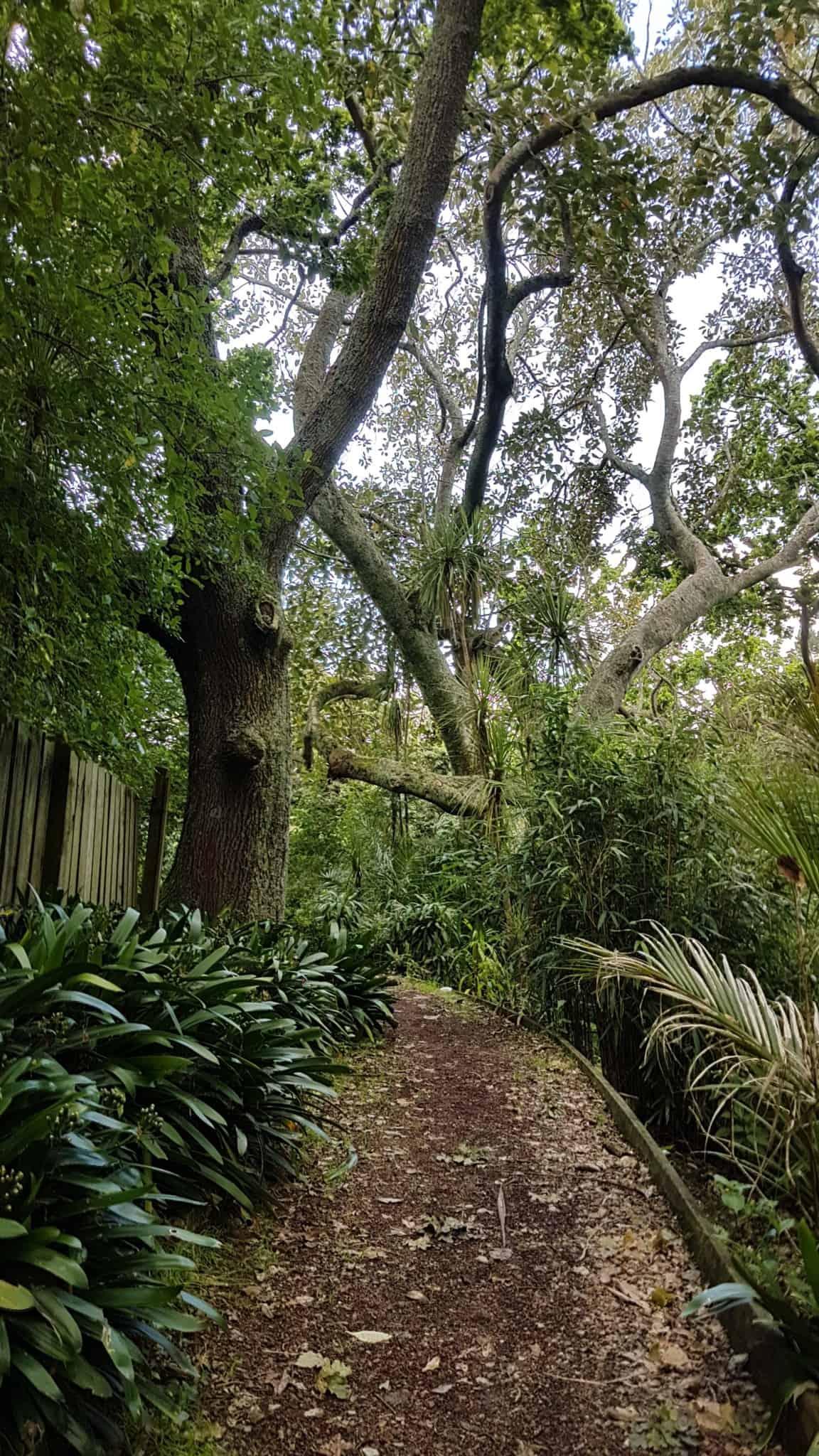 Nouvelle-Zélande, nos premiers pas à Auckland 🥝 13