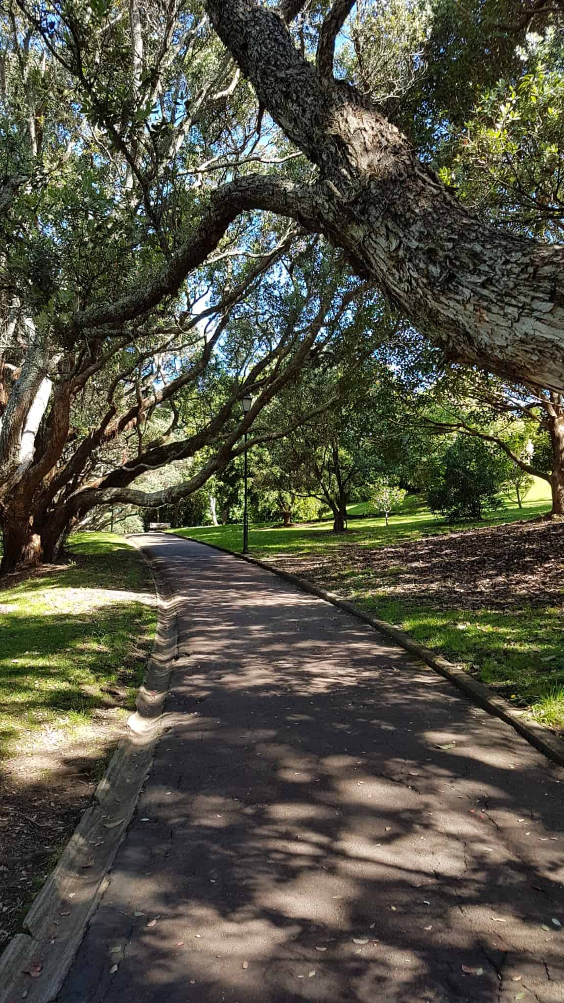 Nouvelle-Zélande, nos premiers pas à Auckland 🥝 11