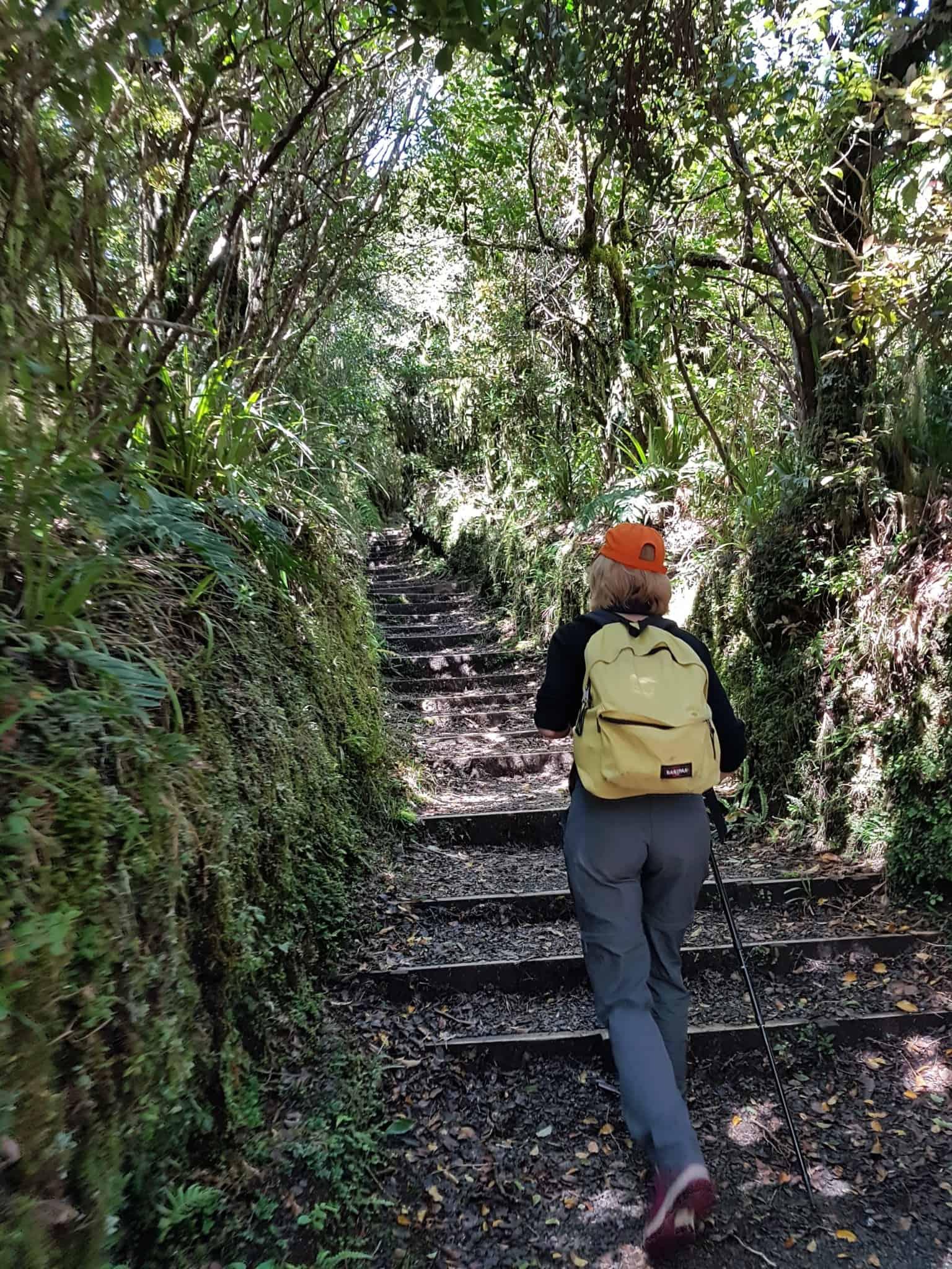 Nouvelle-Zélande, rando Holly Hut Track avec vue sur le Mont Taranaki ❤ 2