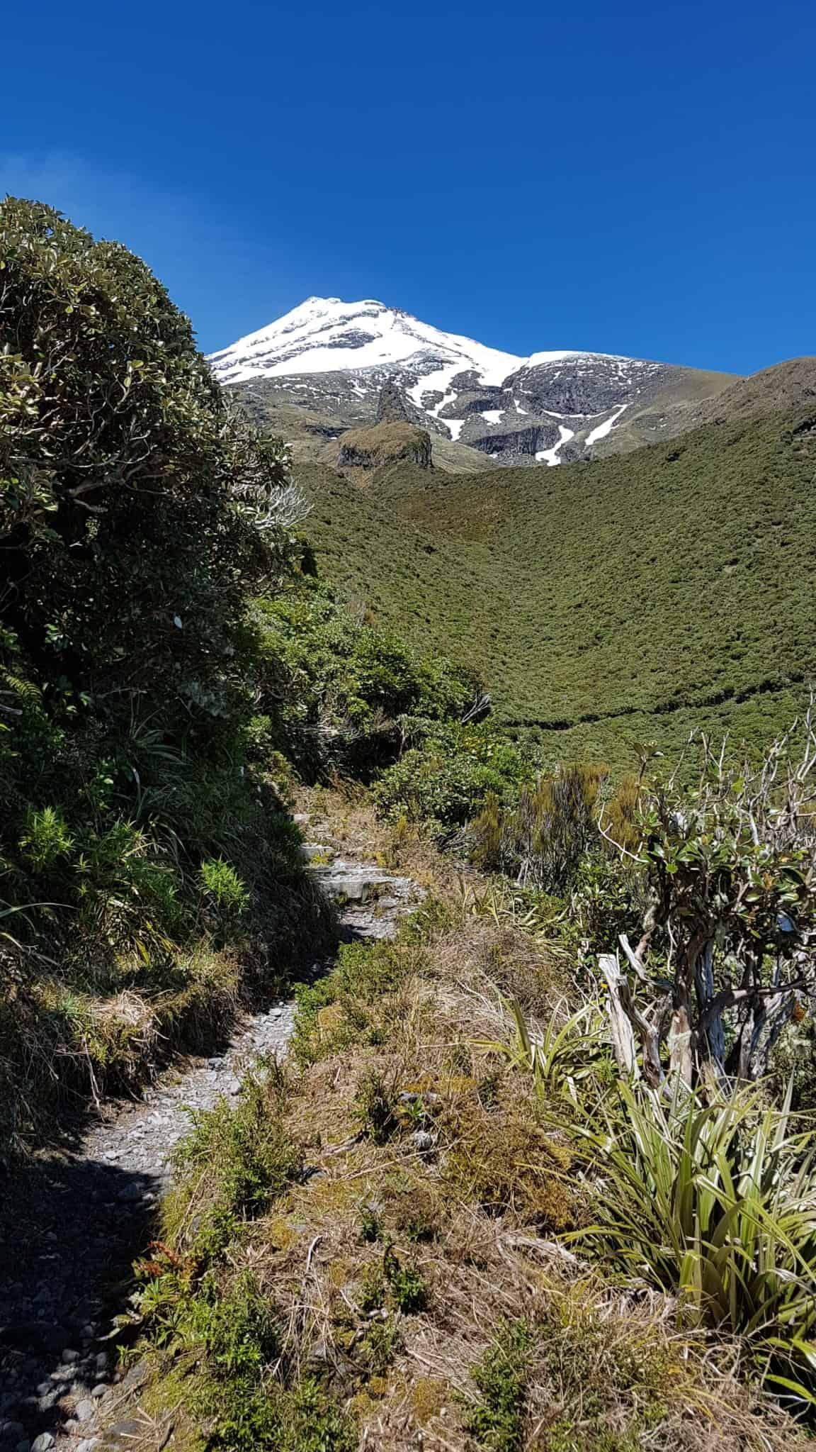 Nouvelle-Zélande, rando Holly Hut Track avec vue sur le Mont Taranaki ❤ 8