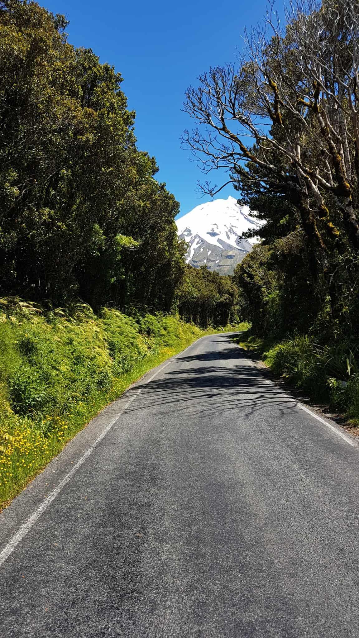 Nouvelle-Zélande, quand ta randonnée se transforme en chasse au trésor dans la jungle 🕵️♂️ 12