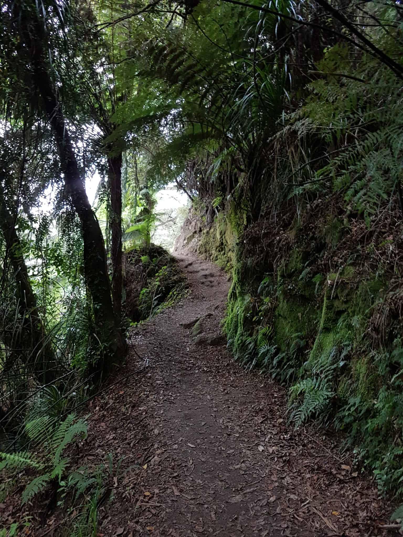 Nouvelle-Zélande, 24 km de randonnée sous la pluie dans le parc d'Abel Tasman 🌧 10