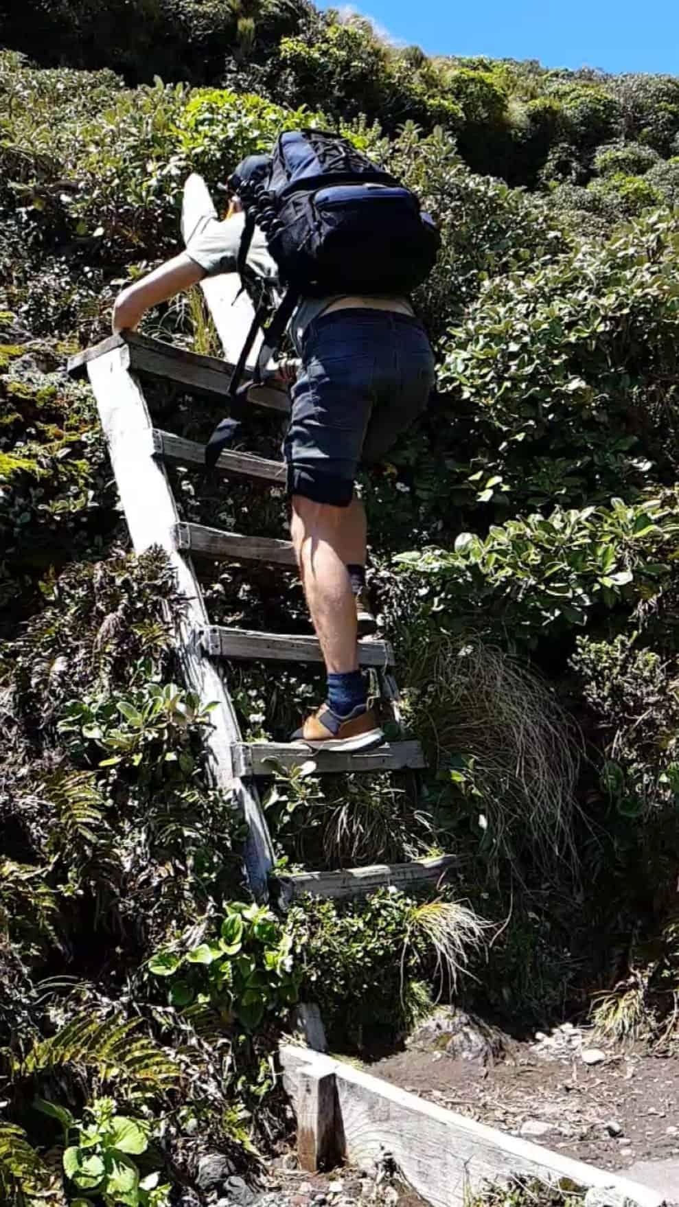 Nouvelle-Zélande, rando Holly Hut Track avec vue sur le Mont Taranaki ❤ 5