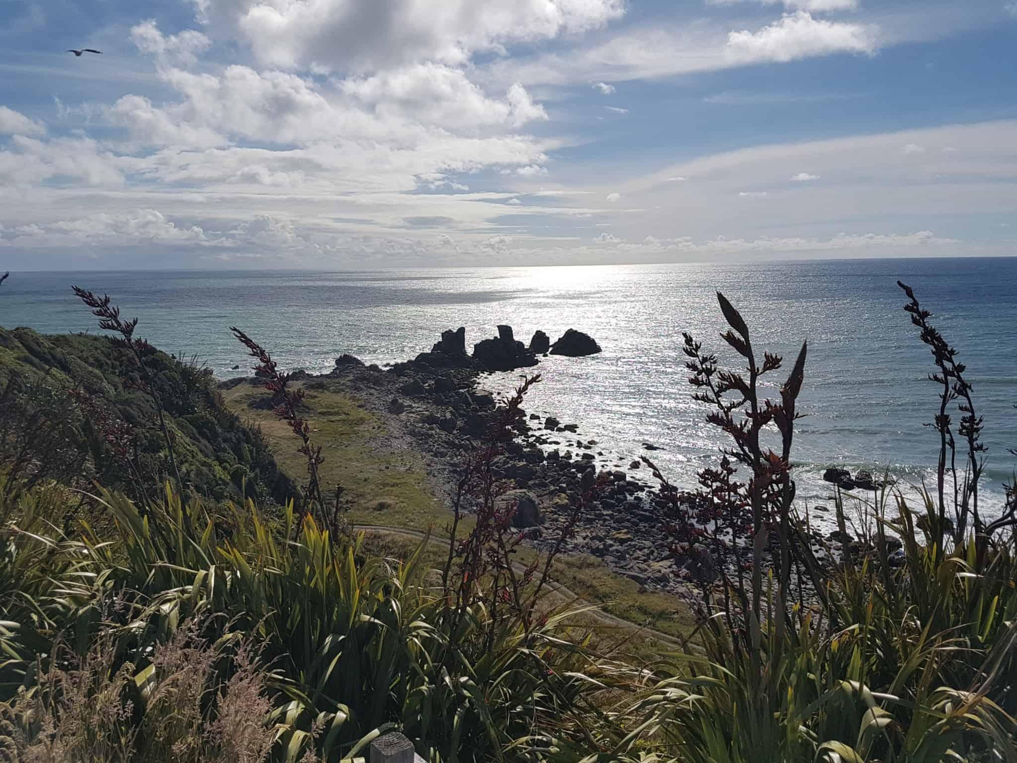 Nouvelle-Zélande, le Cap Foulwind et sa côte sauvage 🌿 15
