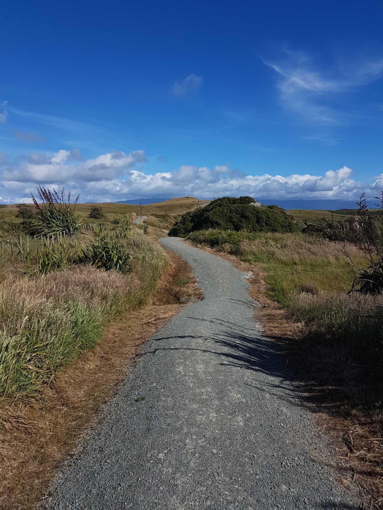 Nouvelle-Zélande, le Cap Foulwind et sa côte sauvage 🌿 12