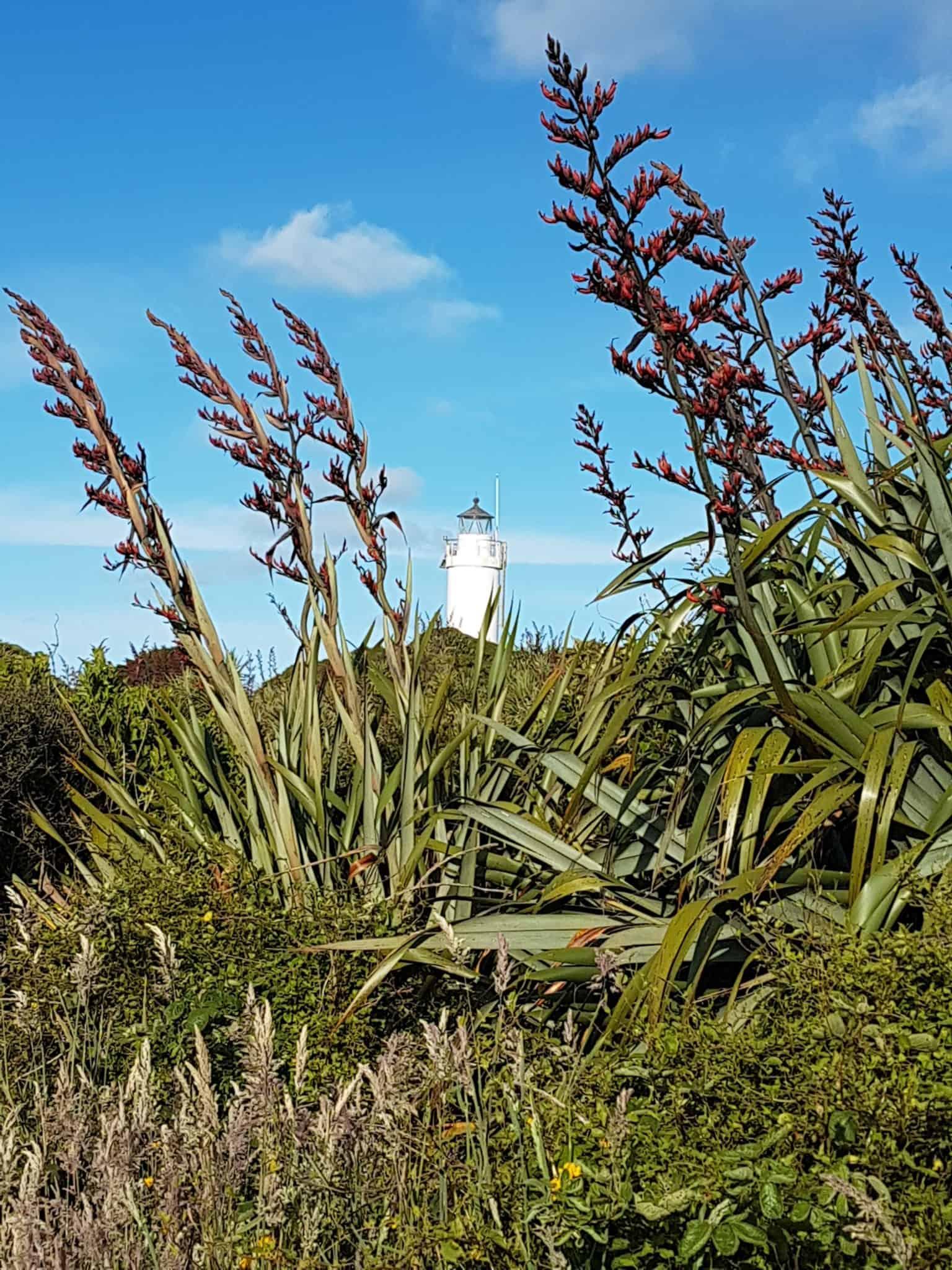 Nouvelle-Zélande, le Cap Foulwind et sa côte sauvage 🌿 20