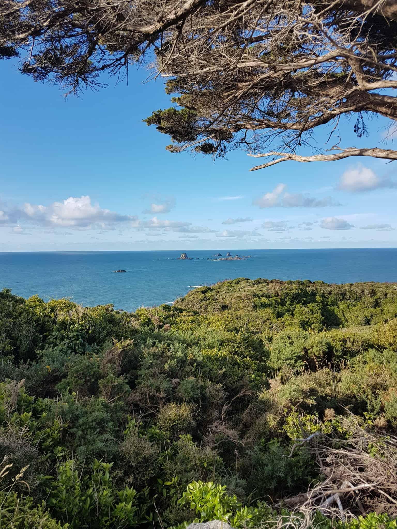 Nouvelle-Zélande, le Cap Foulwind et sa côte sauvage 🌿 17