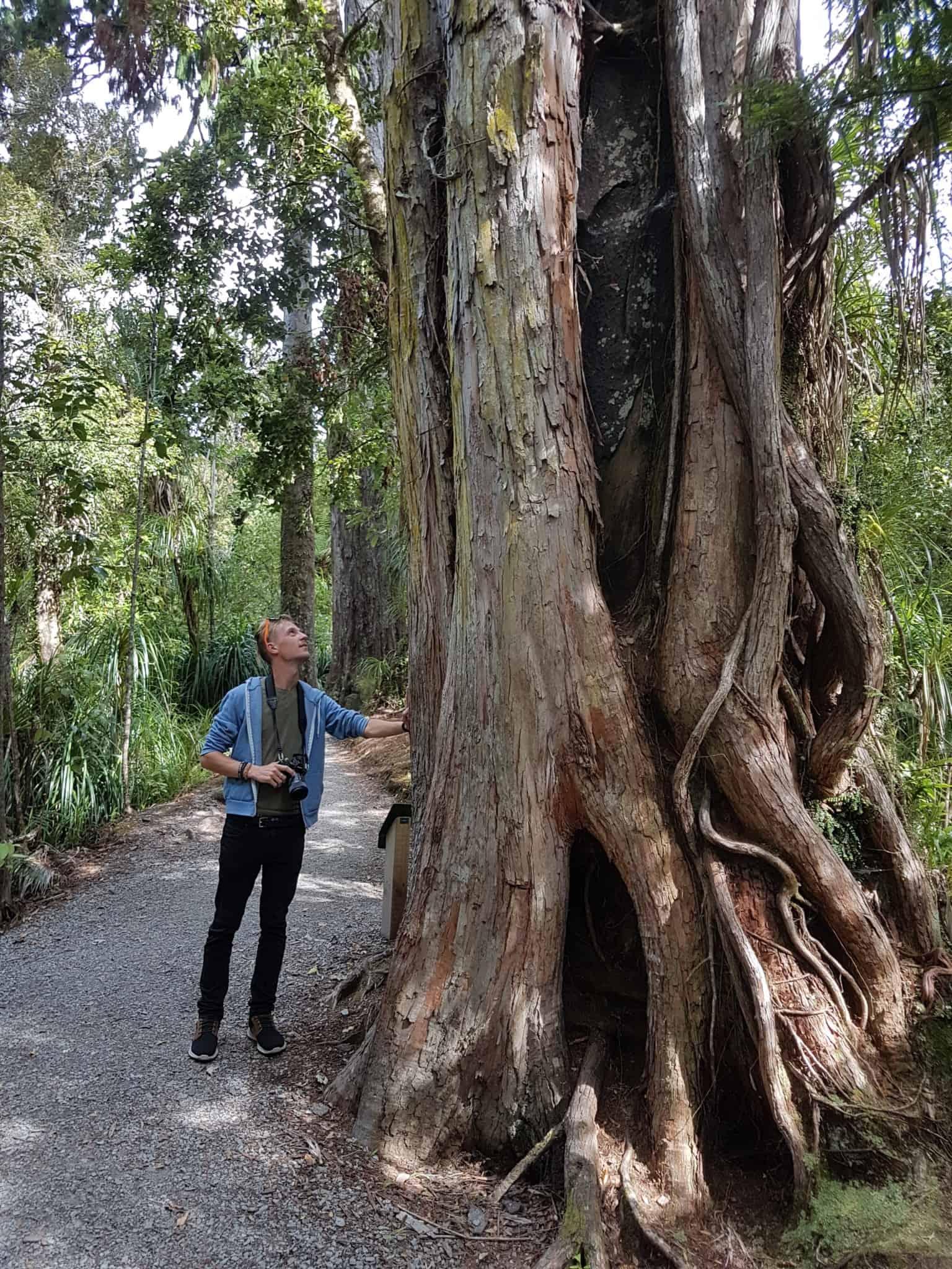 Nouvelle-Zélande, les incontournables  Pancake Rocks ! 🤩 11