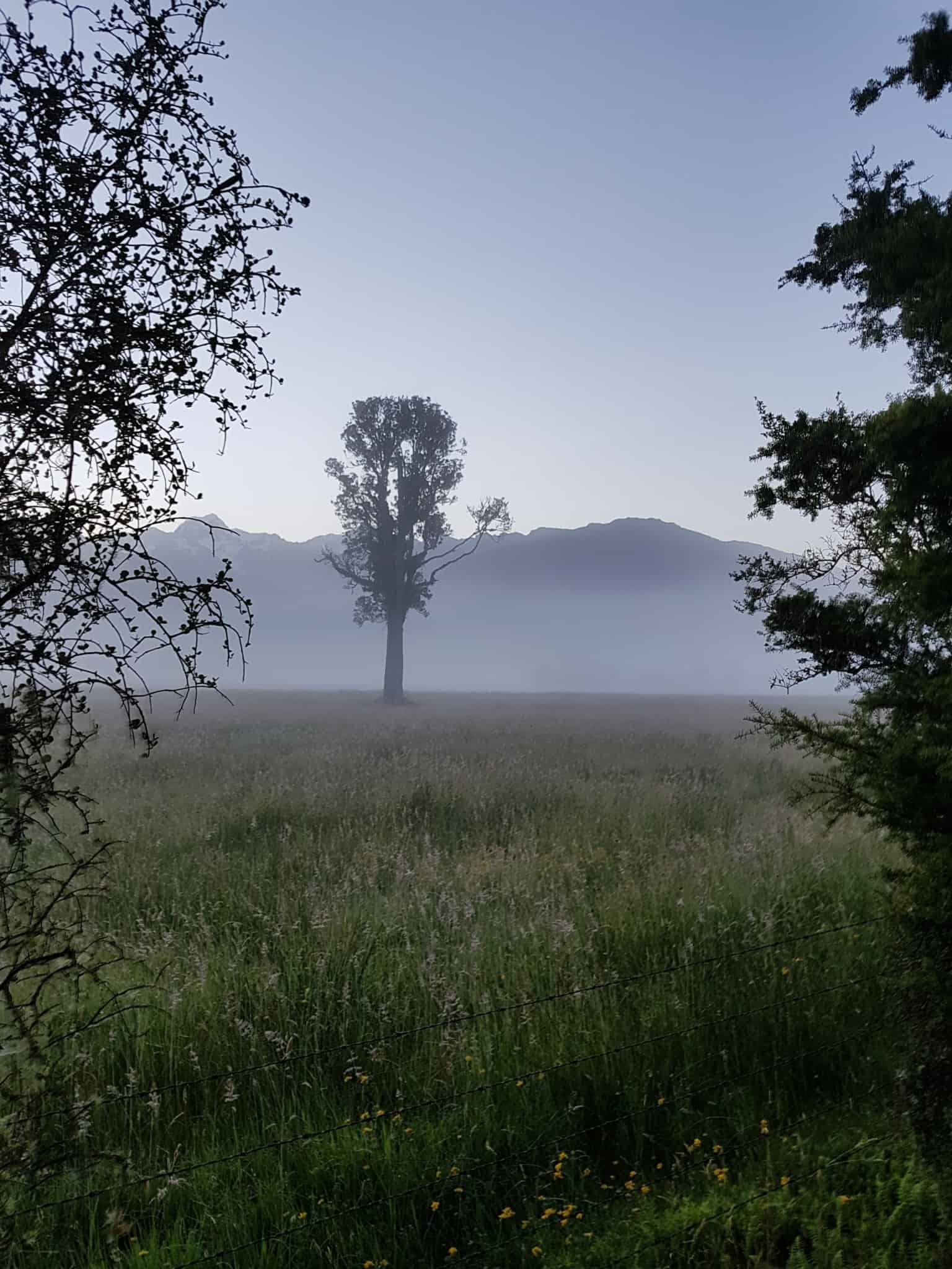 Nouvelle-Zélande, un levé de soleil féerique sur le lac Matheson ☀️ 5