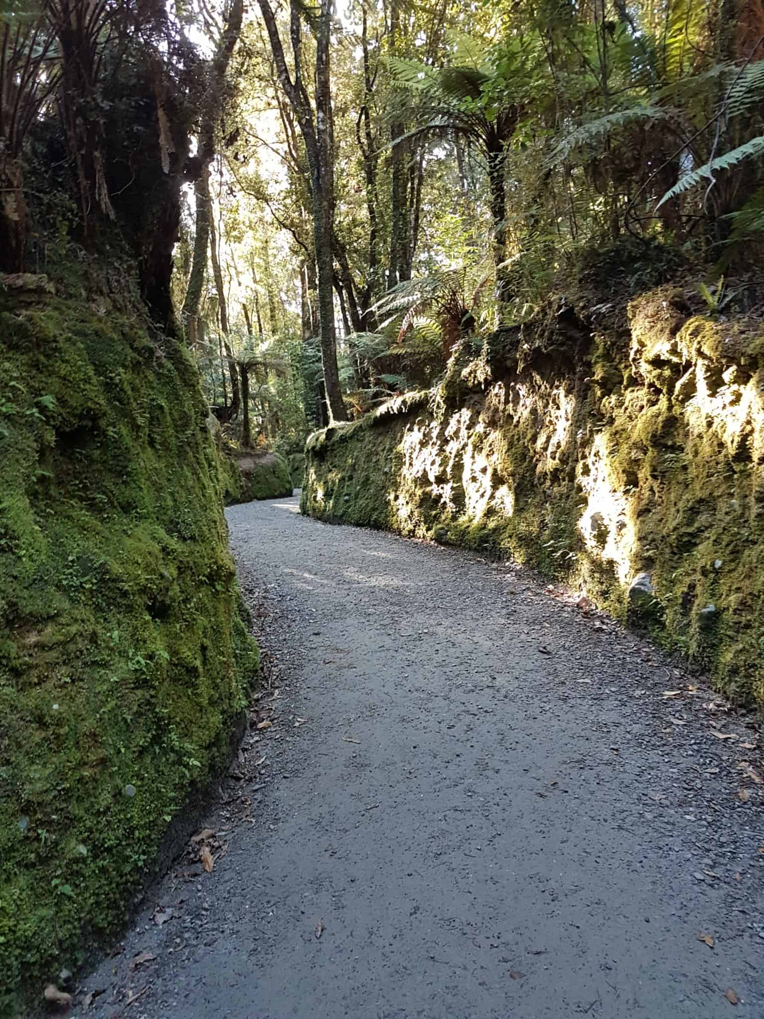 Nouvelle-Zélande, un levé de soleil féerique sur le lac Matheson ☀️ 16